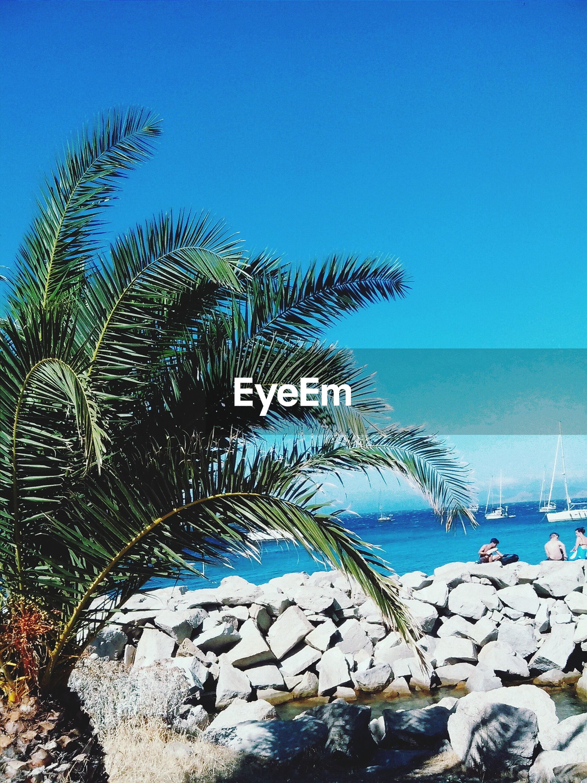 blue, clear sky, water, tranquility, tree, nature, tranquil scene, beauty in nature, scenics, growth, sky, palm tree, sunlight, day, sea, copy space, lake, outdoors, plant, branch