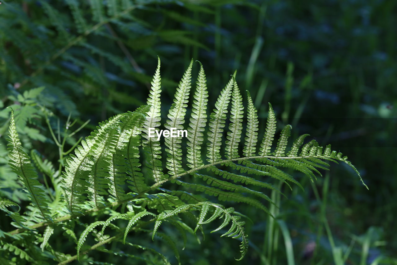 growth, green color, plant, plant part, leaf, beauty in nature, close-up, day, no people, nature, fern, focus on foreground, selective focus, tranquility, tree, outdoors, freshness, foliage, full frame, natural pattern, leaves, spiky