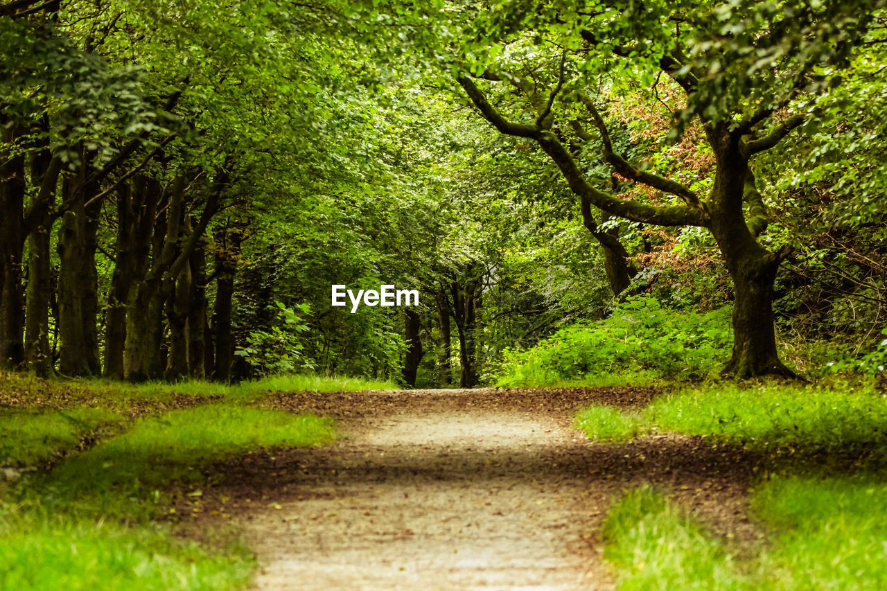 tree, plant, green color, road, nature, direction, forest, tranquility, land, the way forward, no people, beauty in nature, day, transportation, tranquil scene, grass, landscape, footpath, growth, environment, outdoors, woodland, treelined