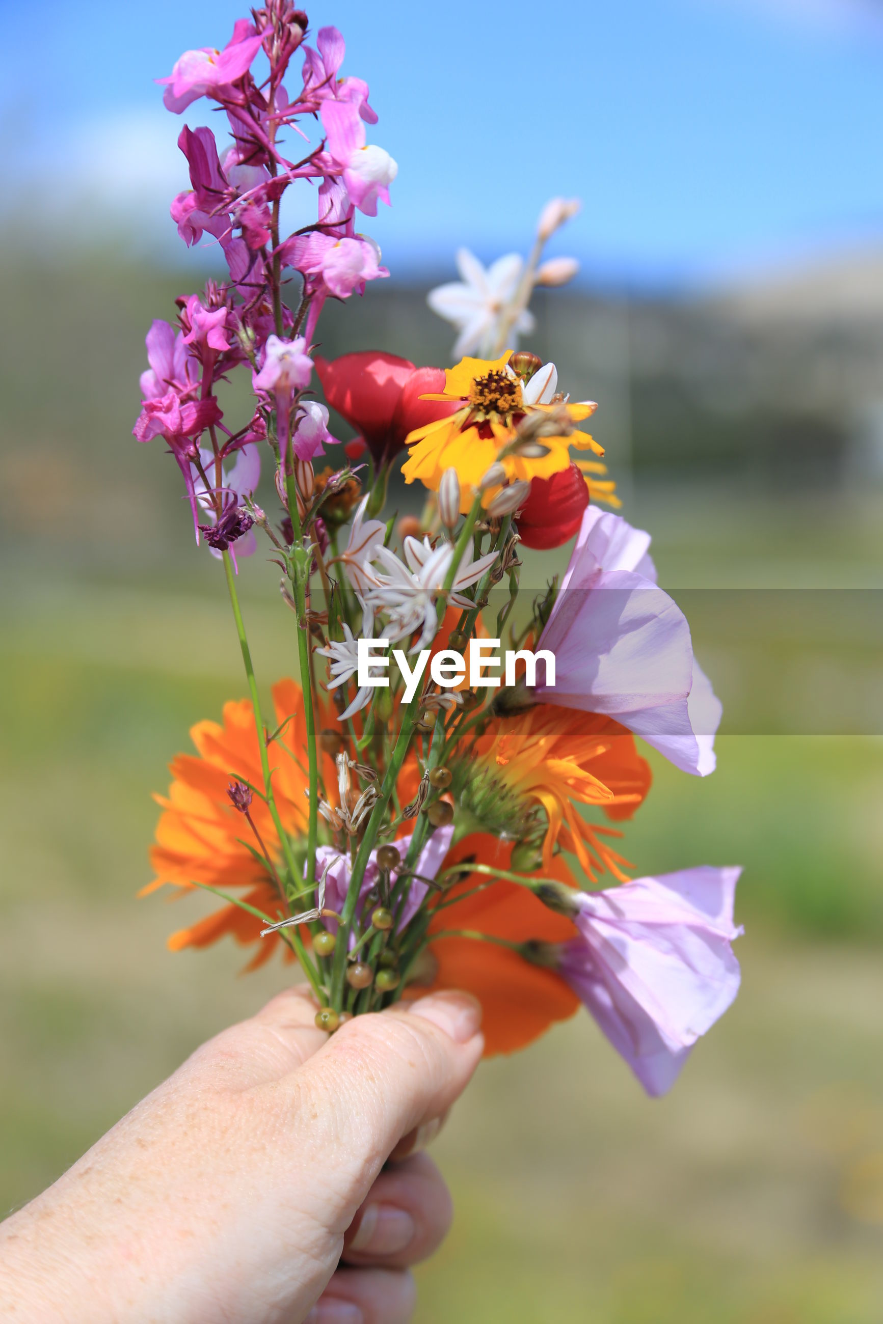 Cropped image of woman holding various flowers at field