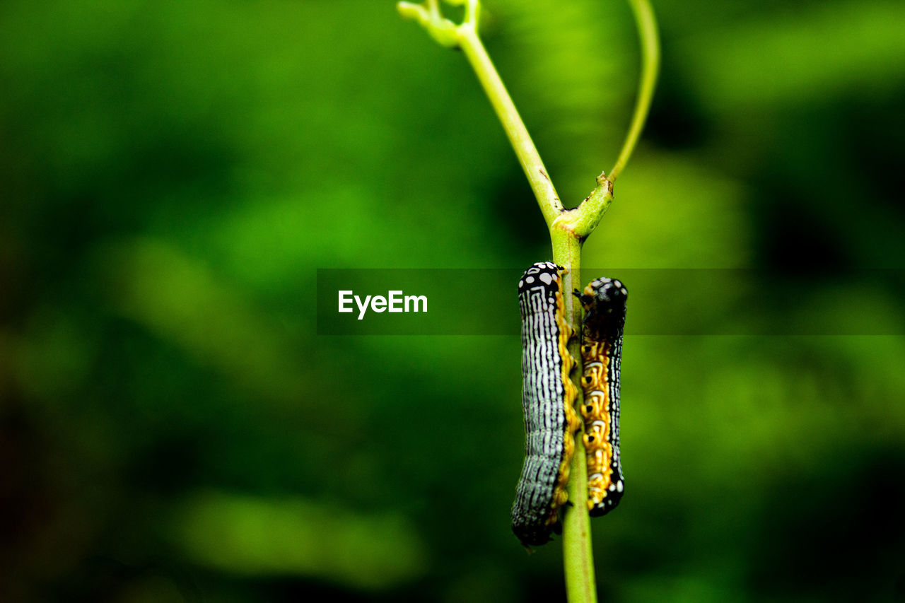 invertebrate, animals in the wild, animal wildlife, animal themes, insect, animal, close-up, focus on foreground, one animal, plant, day, no people, nature, beauty in nature, growth, green color, outdoors, plant stem, caterpillar, flower