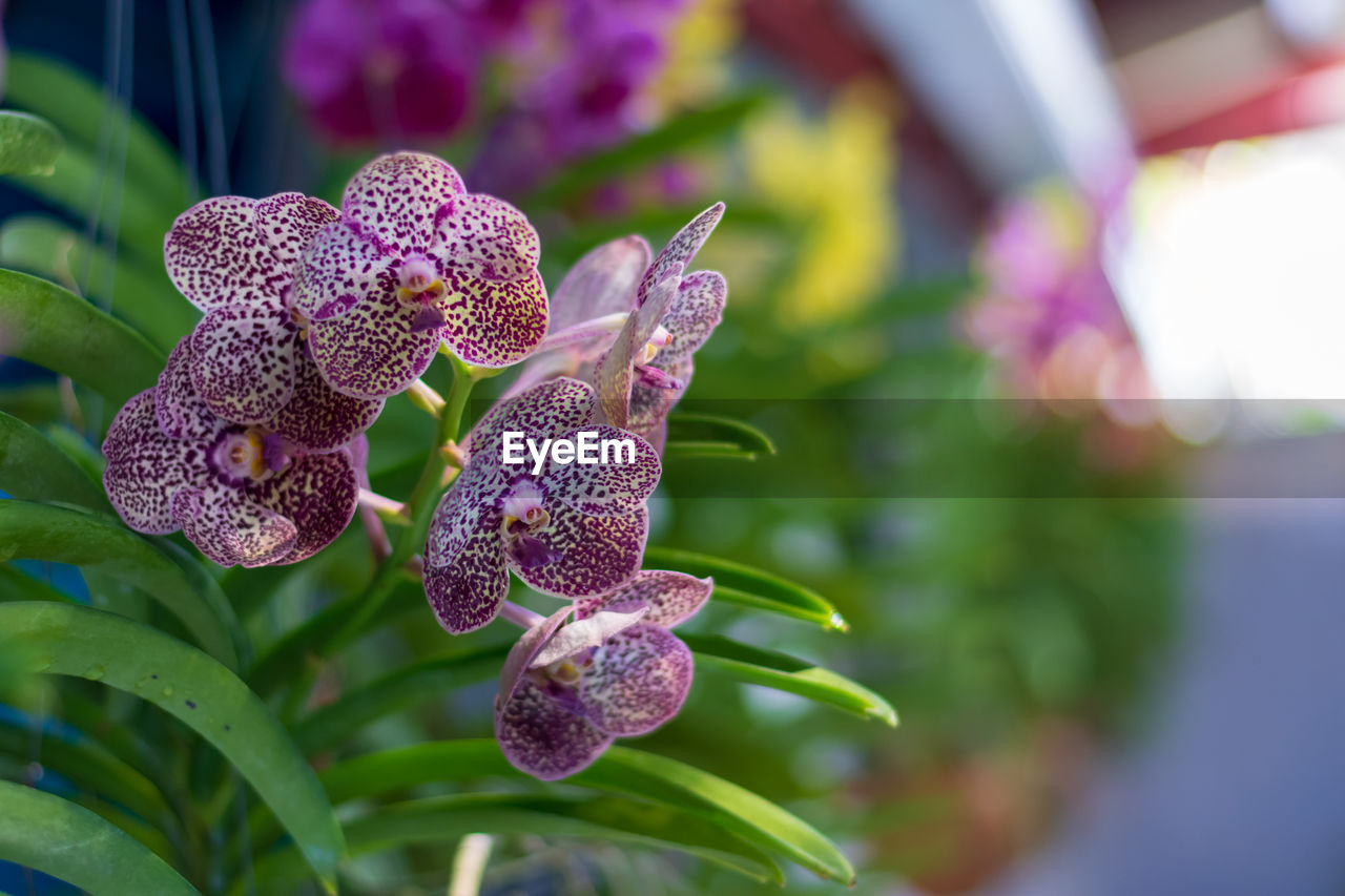 flower, flowering plant, plant, growth, close-up, beauty in nature, freshness, purple, vulnerability, fragility, petal, focus on foreground, flower head, inflorescence, nature, no people, leaf, day, plant part, botany, pollen