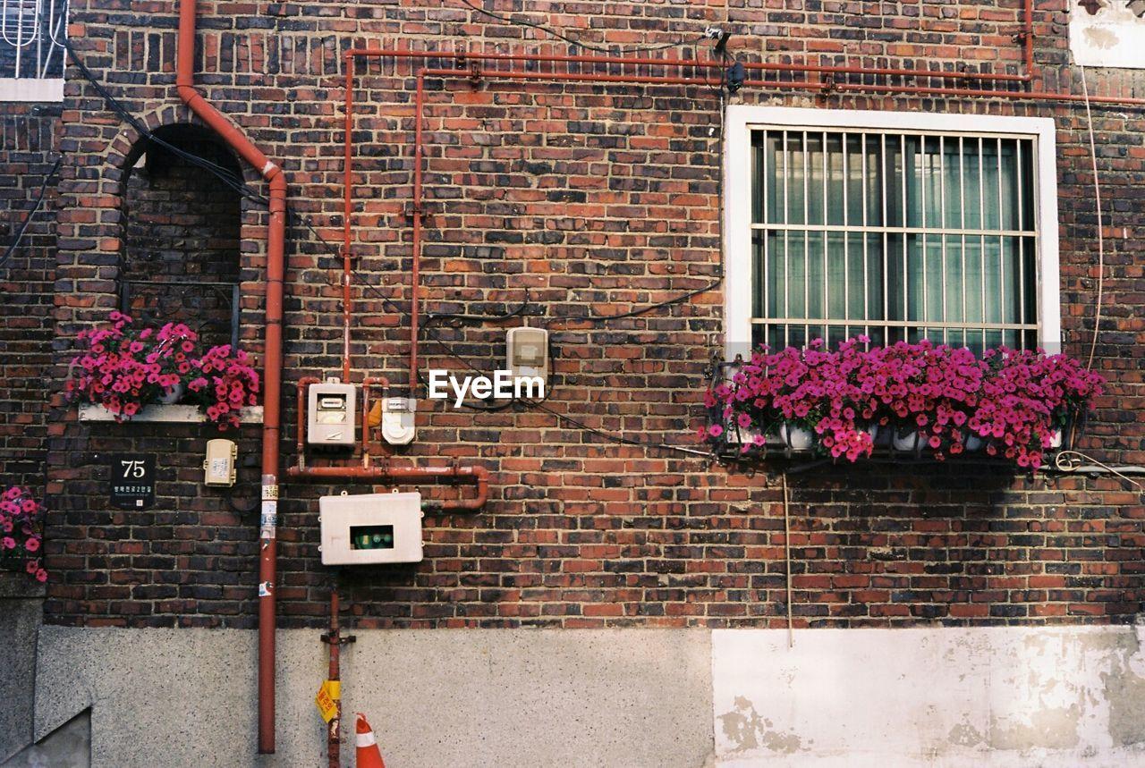 Flowers growing on brick wall