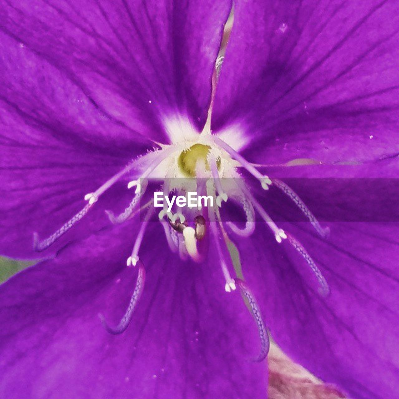 flower, petal, fragility, growth, beauty in nature, nature, flower head, freshness, purple, close-up, pollen, no people, plant, blooming, day, full frame, outdoors, backgrounds
