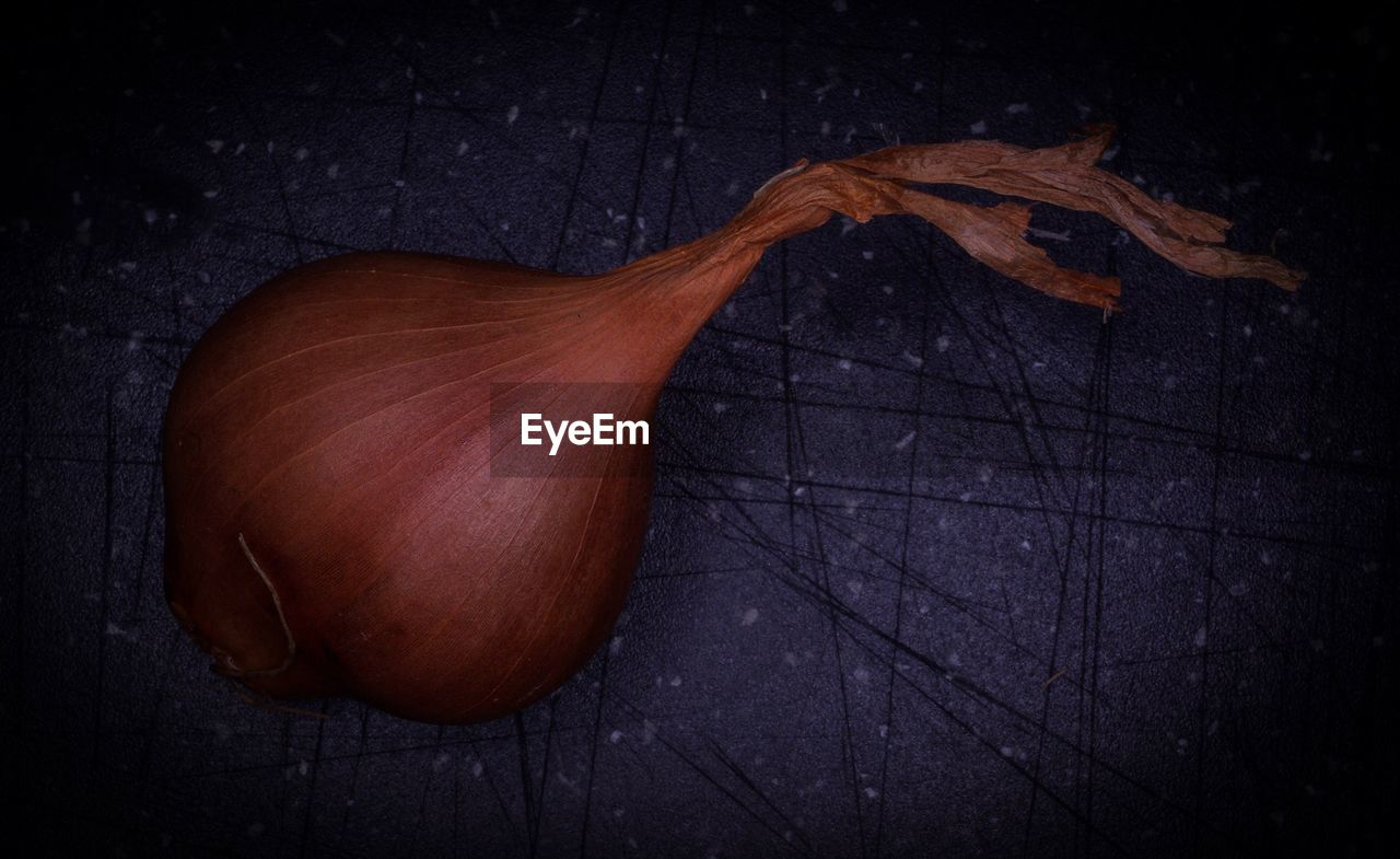Close-up of onion against black background