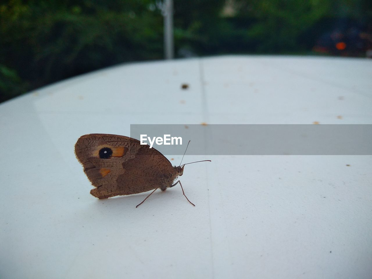 invertebrate, insect, animal themes, animal, animal wildlife, animals in the wild, one animal, close-up, animal wing, butterfly - insect, nature, no people, day, focus on foreground, beauty in nature, animal antenna, animal body part, brown, plant part, leaf, butterfly