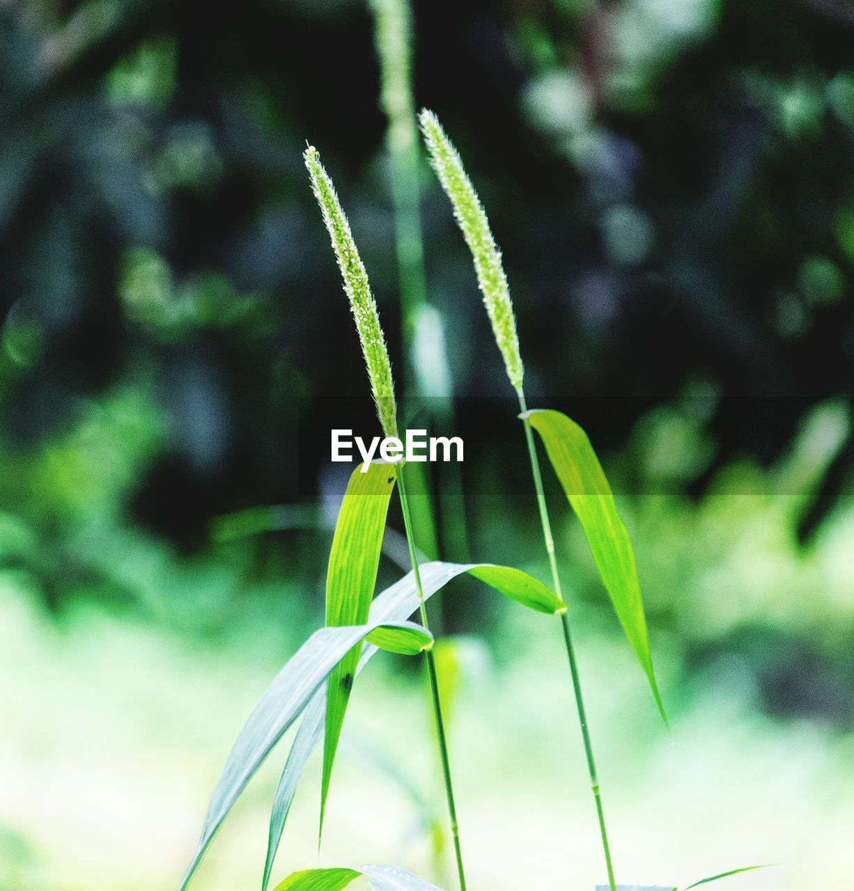 growth, green color, plant, focus on foreground, close-up, no people, nature, plant part, leaf, beauty in nature, day, tranquility, outdoors, selective focus, sunlight, freshness, land, plant stem, vulnerability, environment, blade of grass