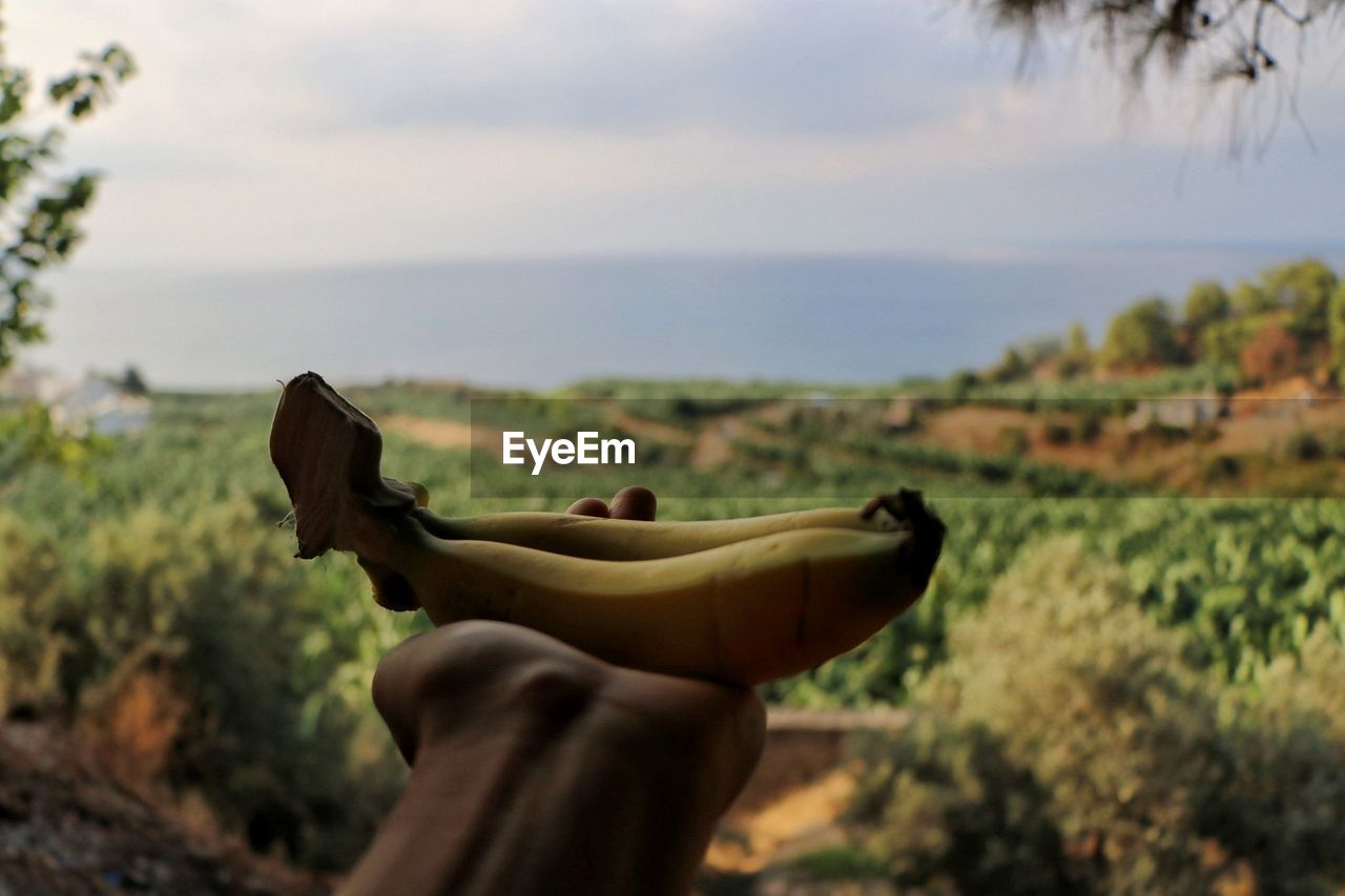 Cropped Hand Of Person Holding Bananas In Forest Against Sky