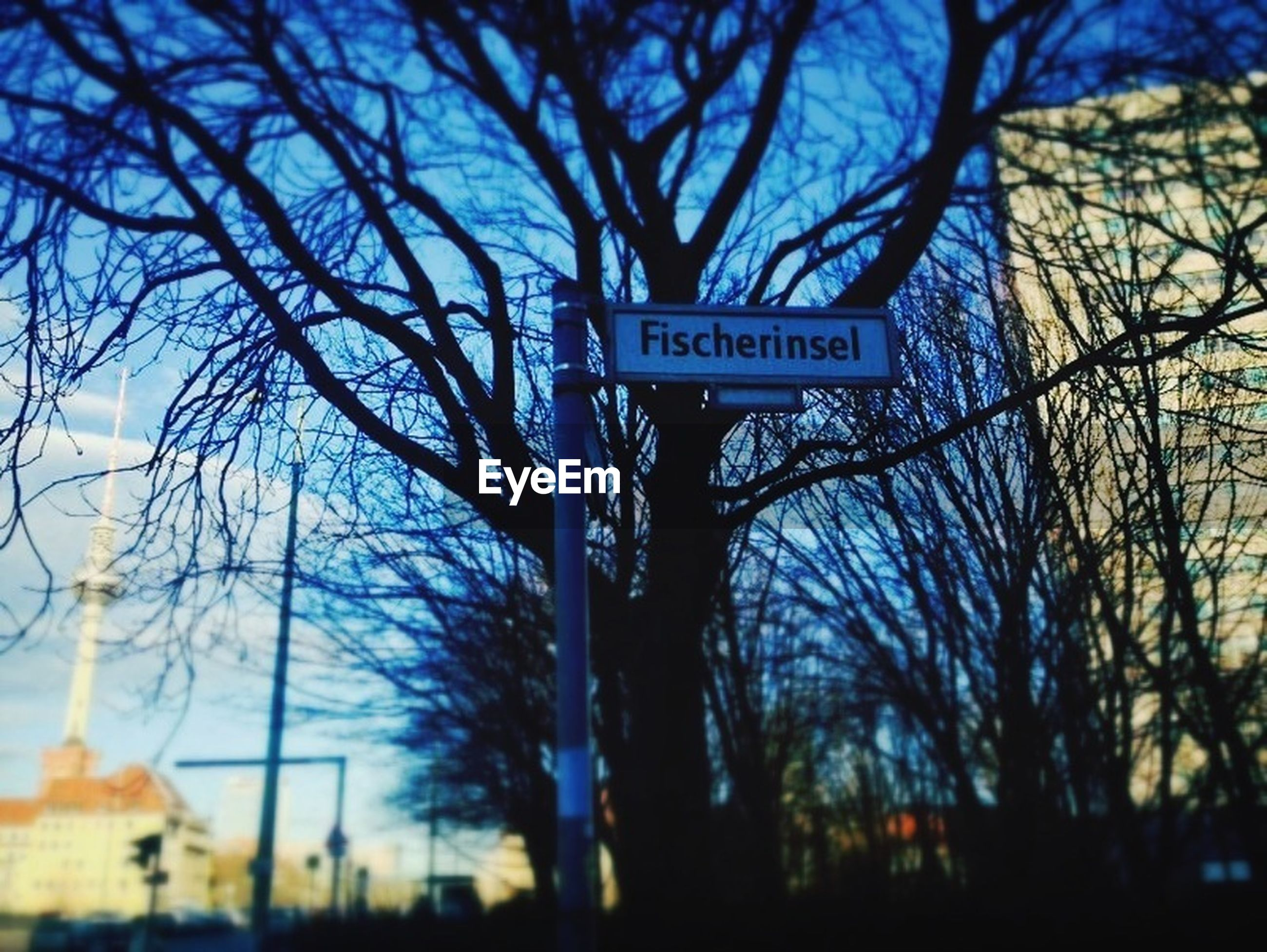 tree, bare tree, branch, text, communication, low angle view, built structure, western script, guidance, building exterior, road sign, architecture, information sign, sign, silhouette, sky, city, no people, directional sign, outdoors