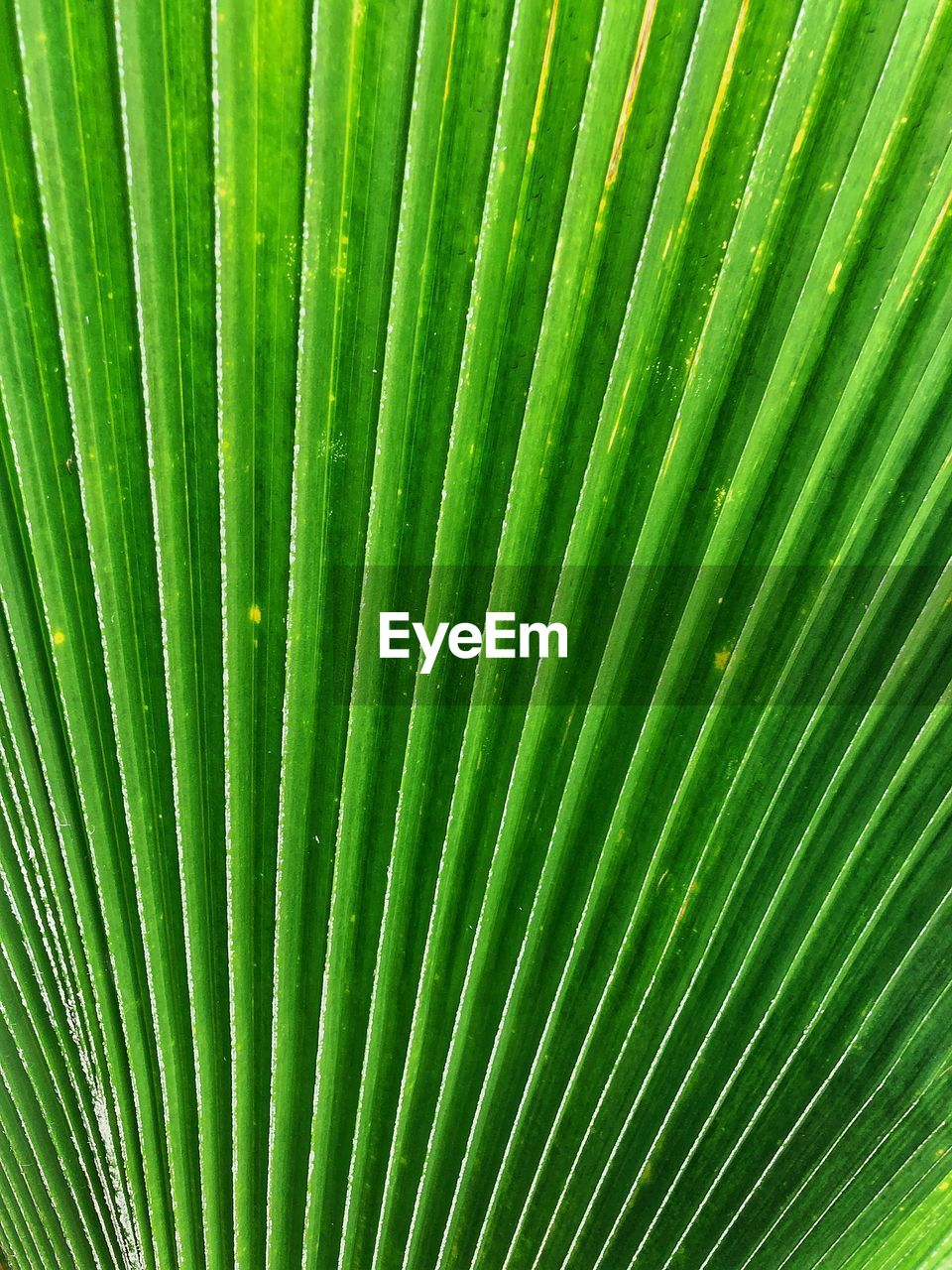 green color, palm tree, full frame, pattern, leaf, backgrounds, tropical climate, palm leaf, growth, plant, no people, close-up, natural pattern, nature, beauty in nature, plant part, textured, tree, frond, botany, outdoors, abstract, abstract backgrounds, rainforest