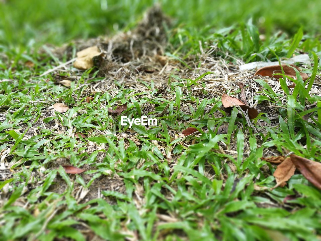 nature, grass, field, growth, green color, selective focus, no people, day, outdoors, close-up