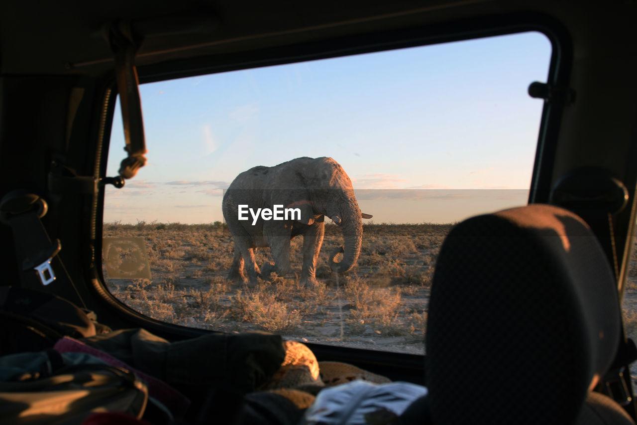 Elephant walking on land seen through car window