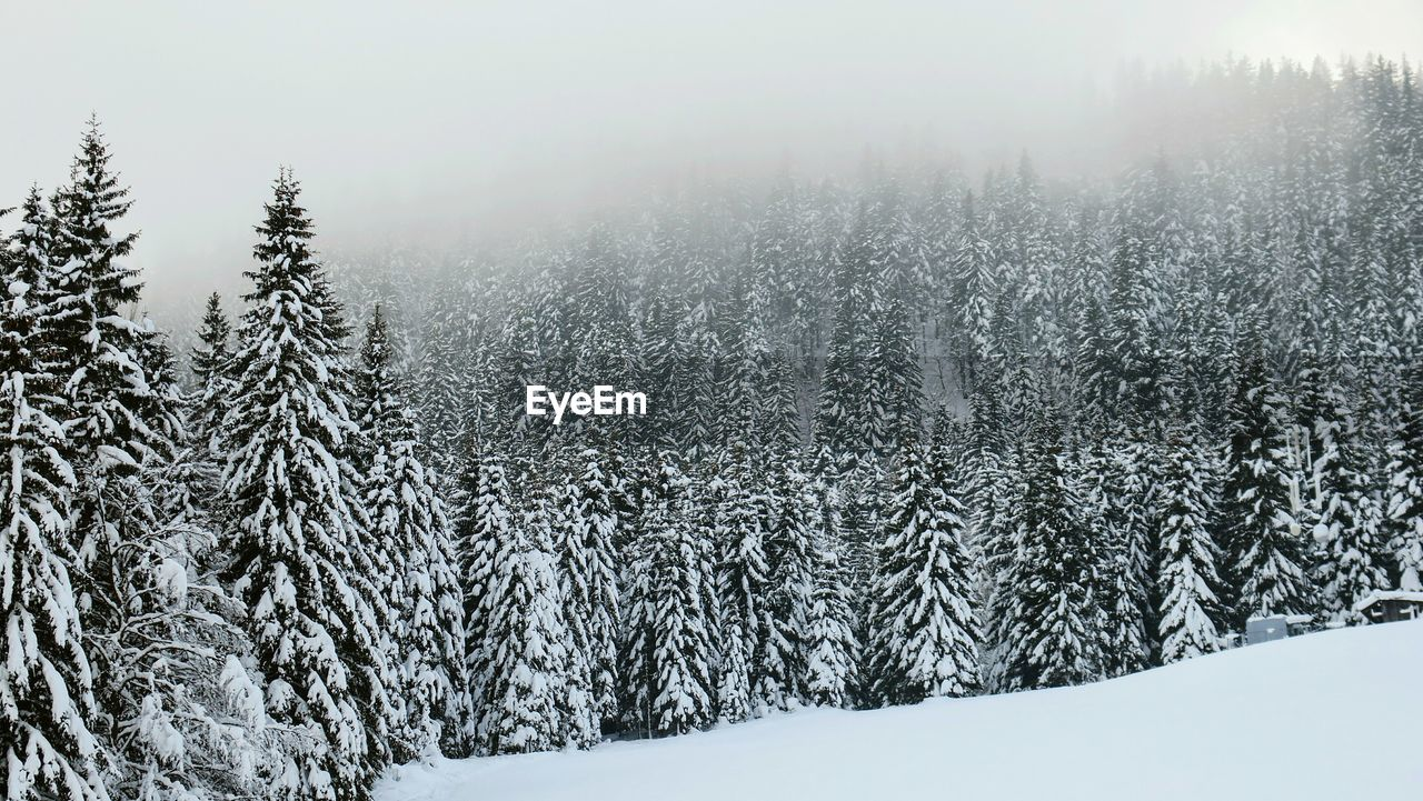 Scenic View Of Landscape During Winter
