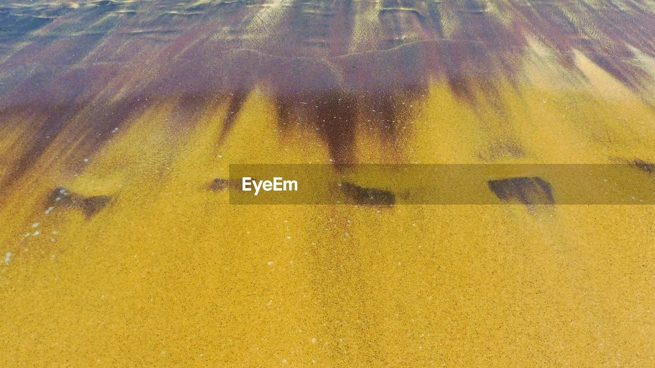 yellow, full frame, backgrounds, oil spill, outdoors, day, no people, animal themes, nature, close-up
