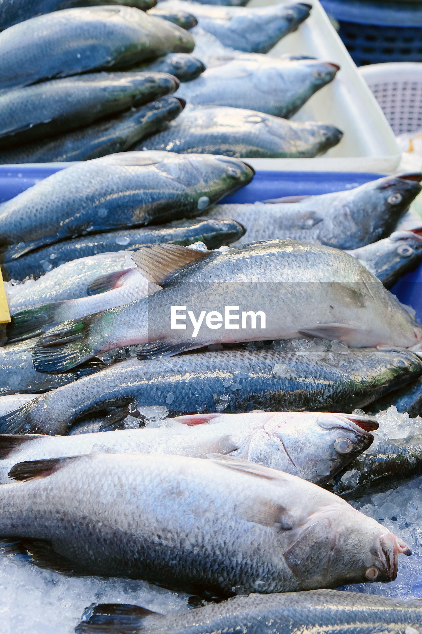 HIGH ANGLE VIEW OF FISH AT MARKET STALL
