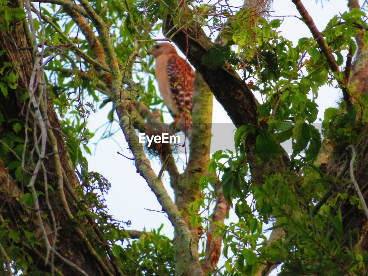 tree, plant, low angle view, branch, animal themes, vertebrate, growth, animal, animal wildlife, animals in the wild, nature, no people, day, bird, one animal, sky, leaf, plant part, outdoors, perching