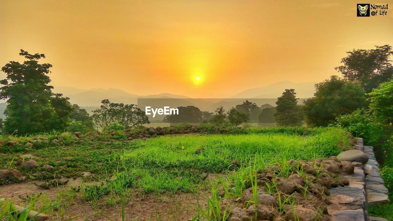nature, beauty in nature, tree, growth, scenics, tranquil scene, landscape, tranquility, field, sunset, agriculture, plant, outdoors, no people, sky, green color, rice paddy, rural scene, grass, day