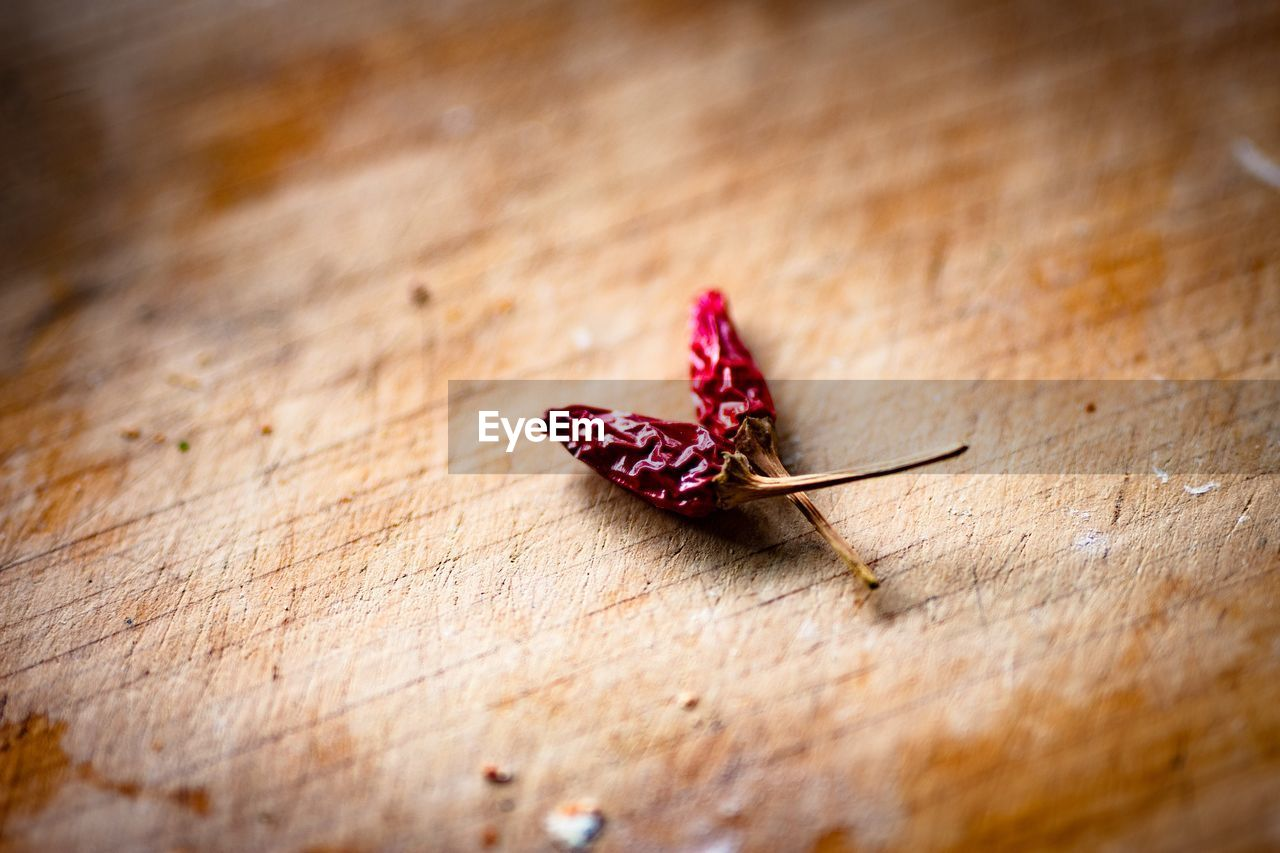 table, wood - material, close-up, selective focus, still life, no people, flower, freshness, high angle view, beauty in nature, vulnerability, indoors, fragility, flowering plant, day, dry, plant, nature, food and drink, pink color, dried, butterfly - insect