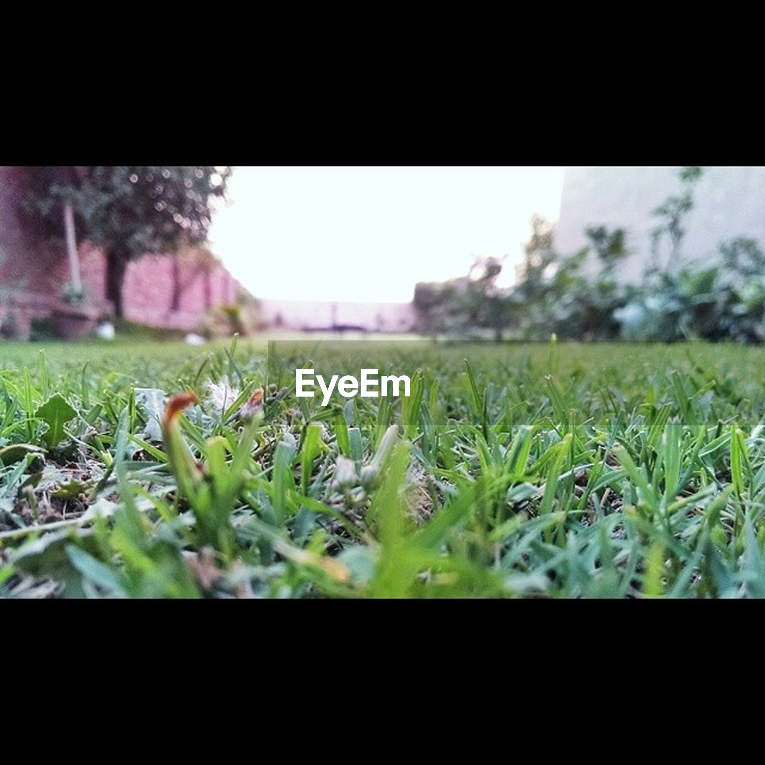 growth, flower, field, plant, grass, freshness, fragility, focus on foreground, nature, green color, selective focus, close-up, beauty in nature, transfer print, day, grassy, auto post production filter, outdoors, tranquility, stem