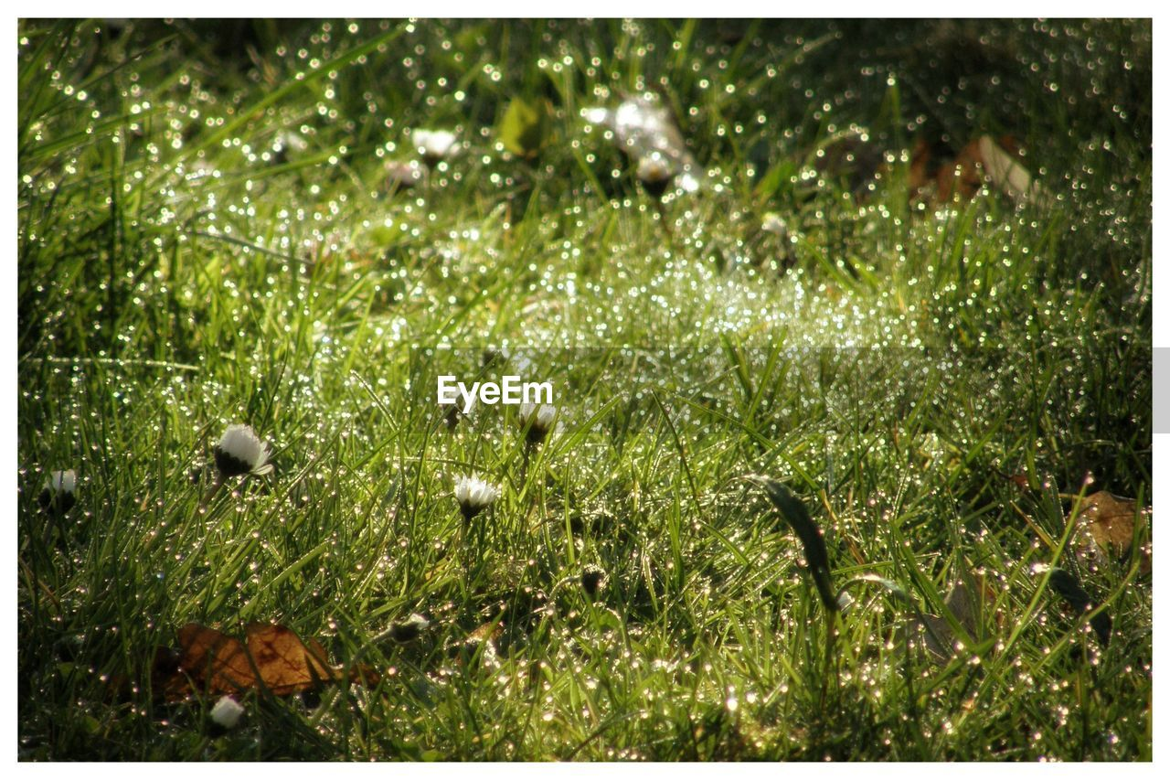grass, nature, growth, plant, flora, no people, beauty in nature, outdoors, flower, day, freshness, close-up