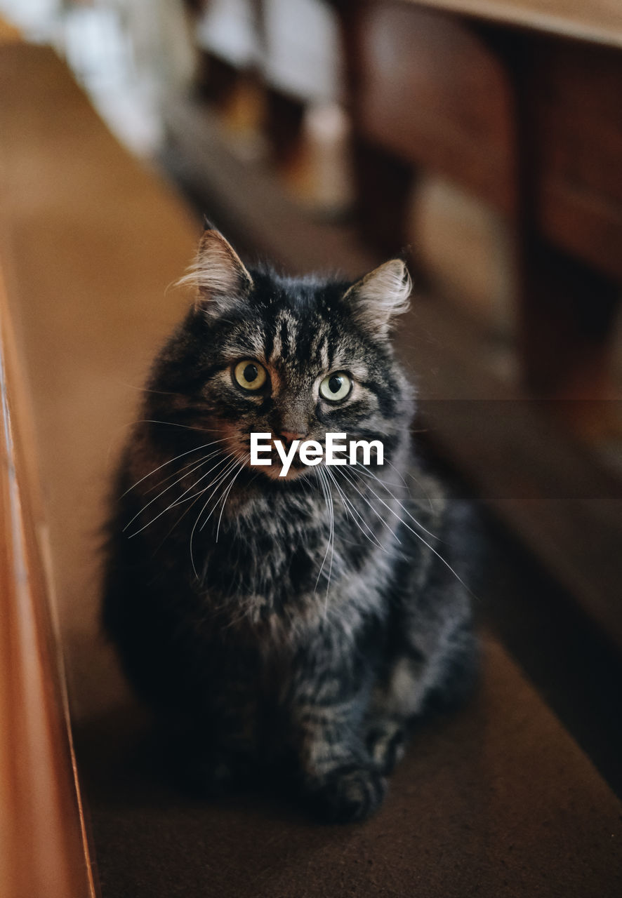 domestic, pets, mammal, domestic cat, domestic animals, cat, looking at camera, portrait, one animal, feline, indoors, no people, whisker, vertebrate, focus on foreground, high angle view, home interior, animal eye