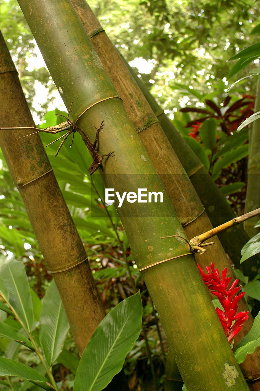 growth, green color, nature, day, outdoors, no people, tree, beauty in nature, plant, leaf, focus on foreground, close-up, bamboo - plant, freshness