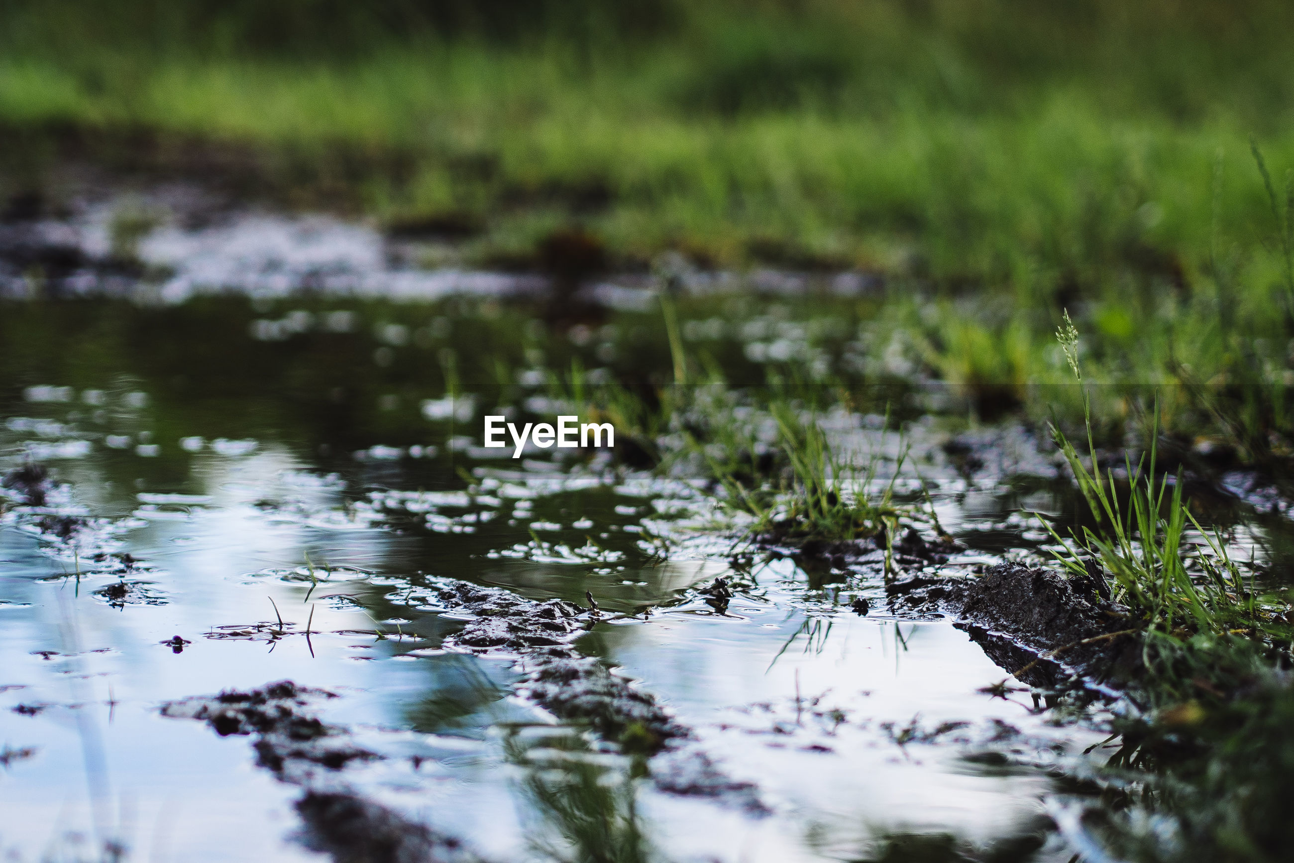 water, reflection, lake, grass, tranquility, nature, waterfront, plant, tranquil scene, beauty in nature, growth, wet, selective focus, outdoors, day, green color, pond, no people, river, scenics