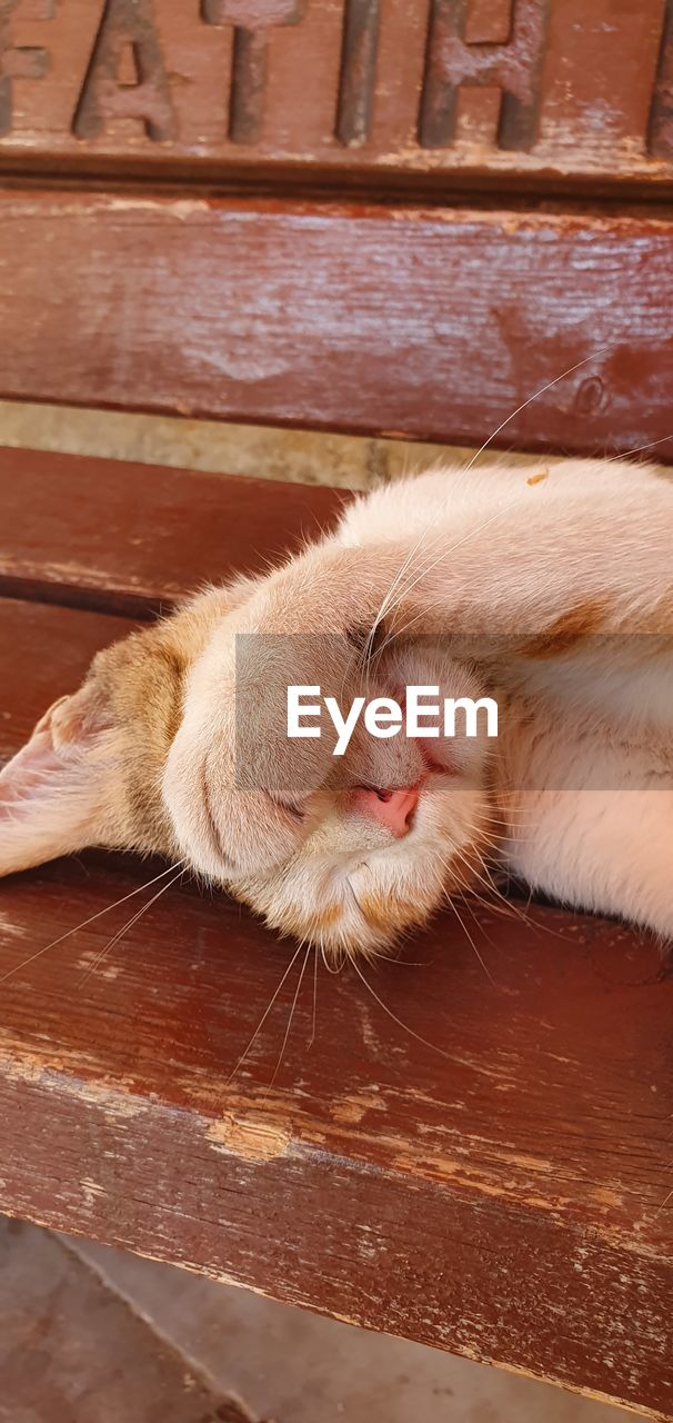 cat, domestic cat, feline, one animal, domestic, animal themes, mammal, pets, domestic animals, animal, relaxation, vertebrate, sleeping, wood - material, eyes closed, resting, no people, indoors, lying down, close-up, whisker, animal head, ginger cat, napping