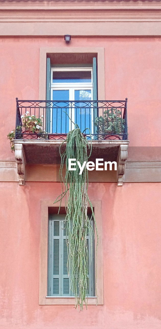 building exterior, architecture, built structure, window, house, potted plant, no people, plant, outdoors, day, window box