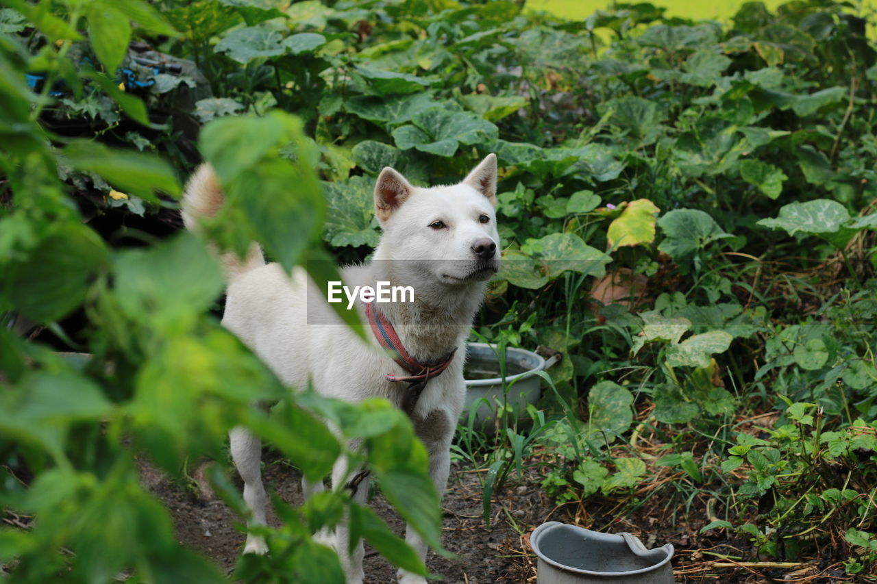 Dog Looking Away While Standing Amidst Plants In Yard
