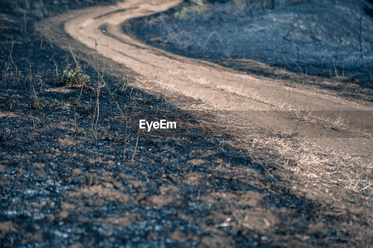 High Angle View Of Dirt Road Amidst Ash At Forest