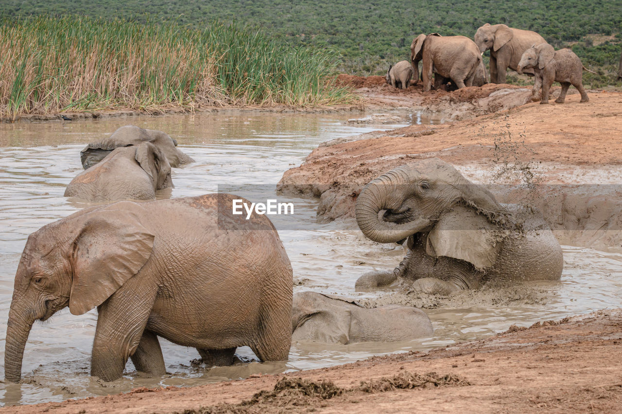 VIEW OF ELEPHANT DRINKING WATER IN A FOREST