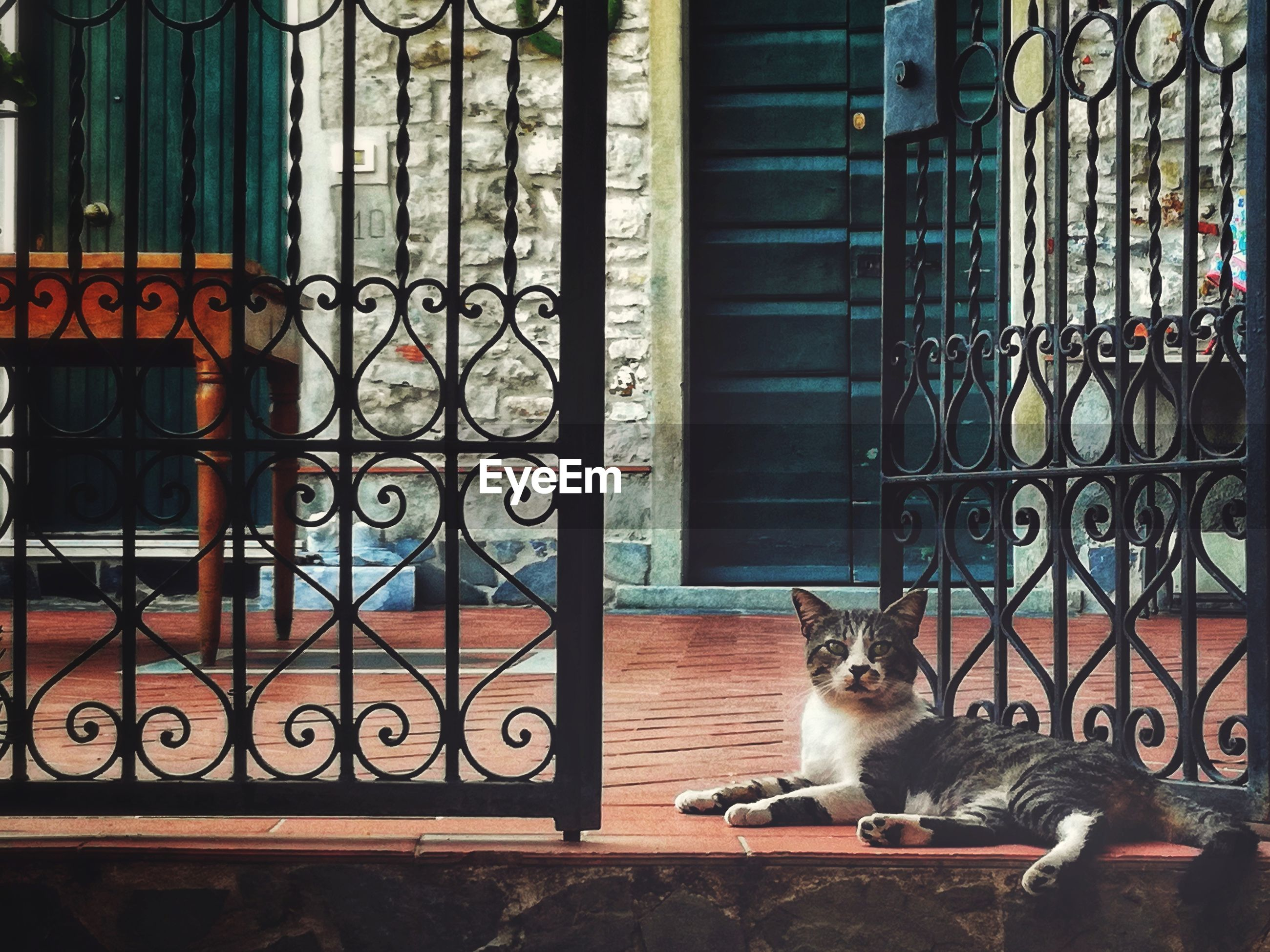 PORTRAIT OF A CAT SITTING ON METAL WINDOW