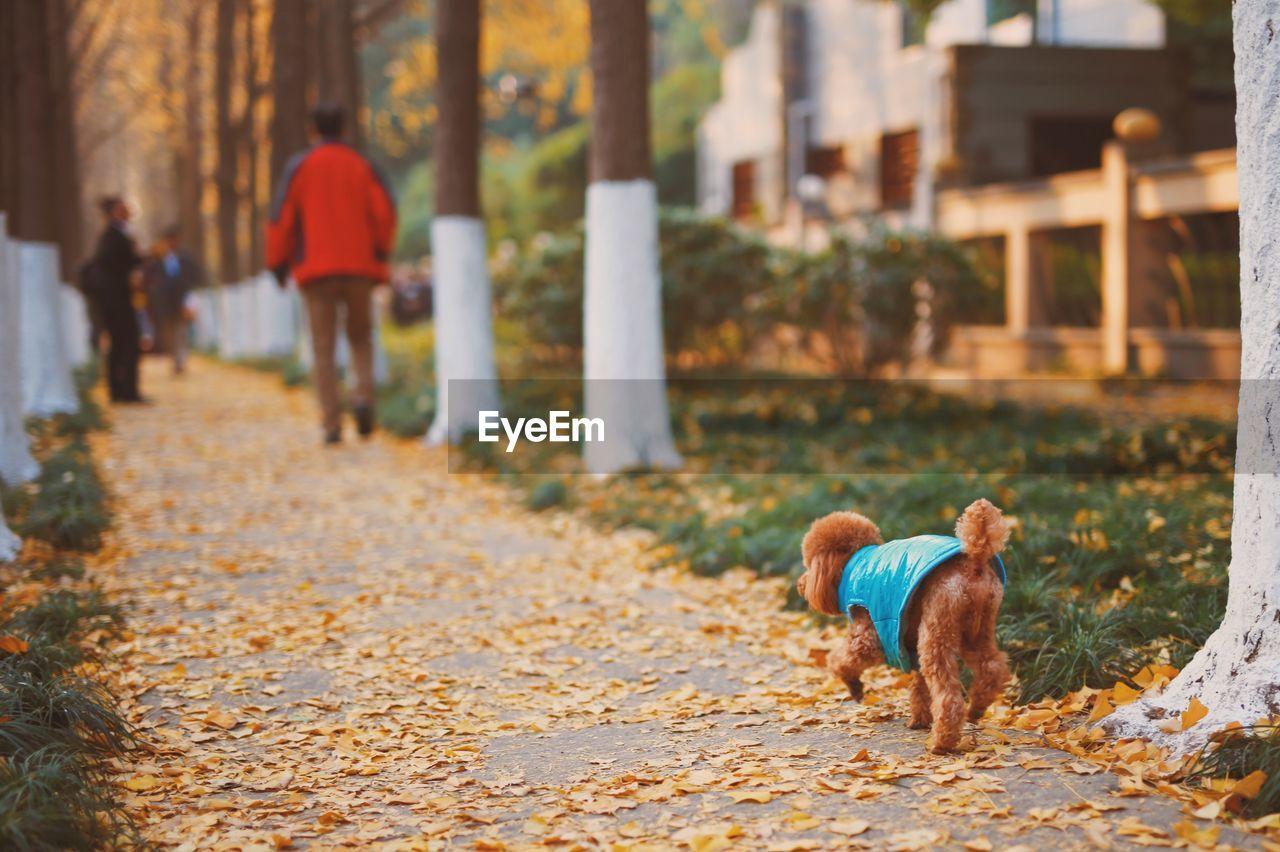 Dog Walking On Footpath