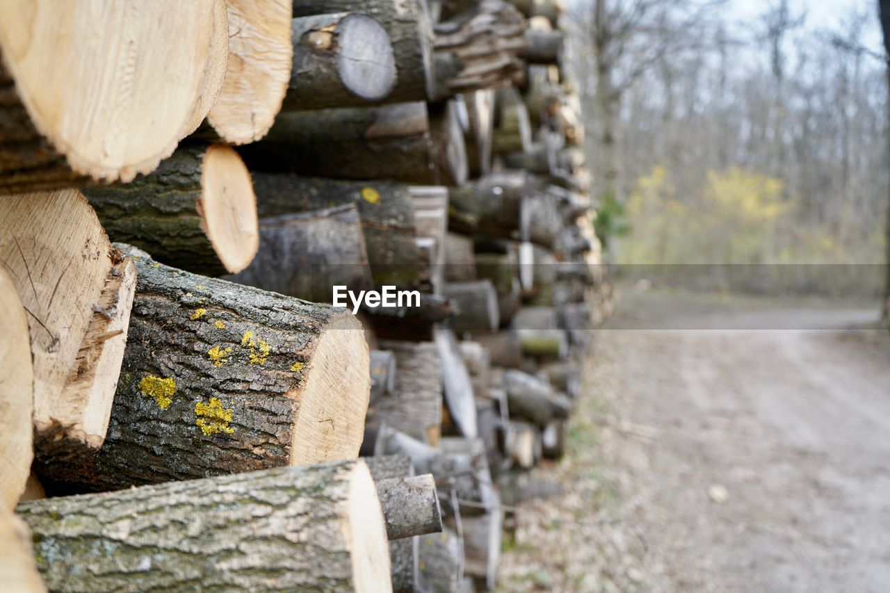 timber, log, tree, wood, wood - material, deforestation, forest, firewood, lumber industry, nature, large group of objects, day, stack, no people, outdoors, fuel and power generation, selective focus, plant, abundance, in a row, woodpile