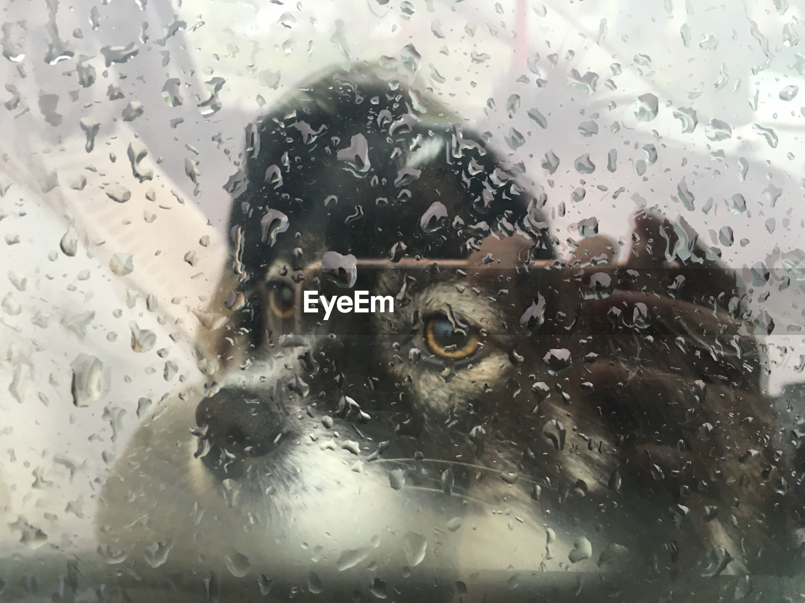 Reflection of person photographing dog through wet glass