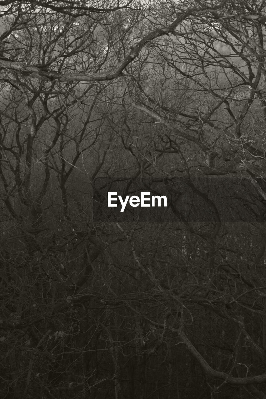 bare tree, branch, tree, winter, nature, cold temperature, no people, snow, night, outdoors, beauty in nature, close-up