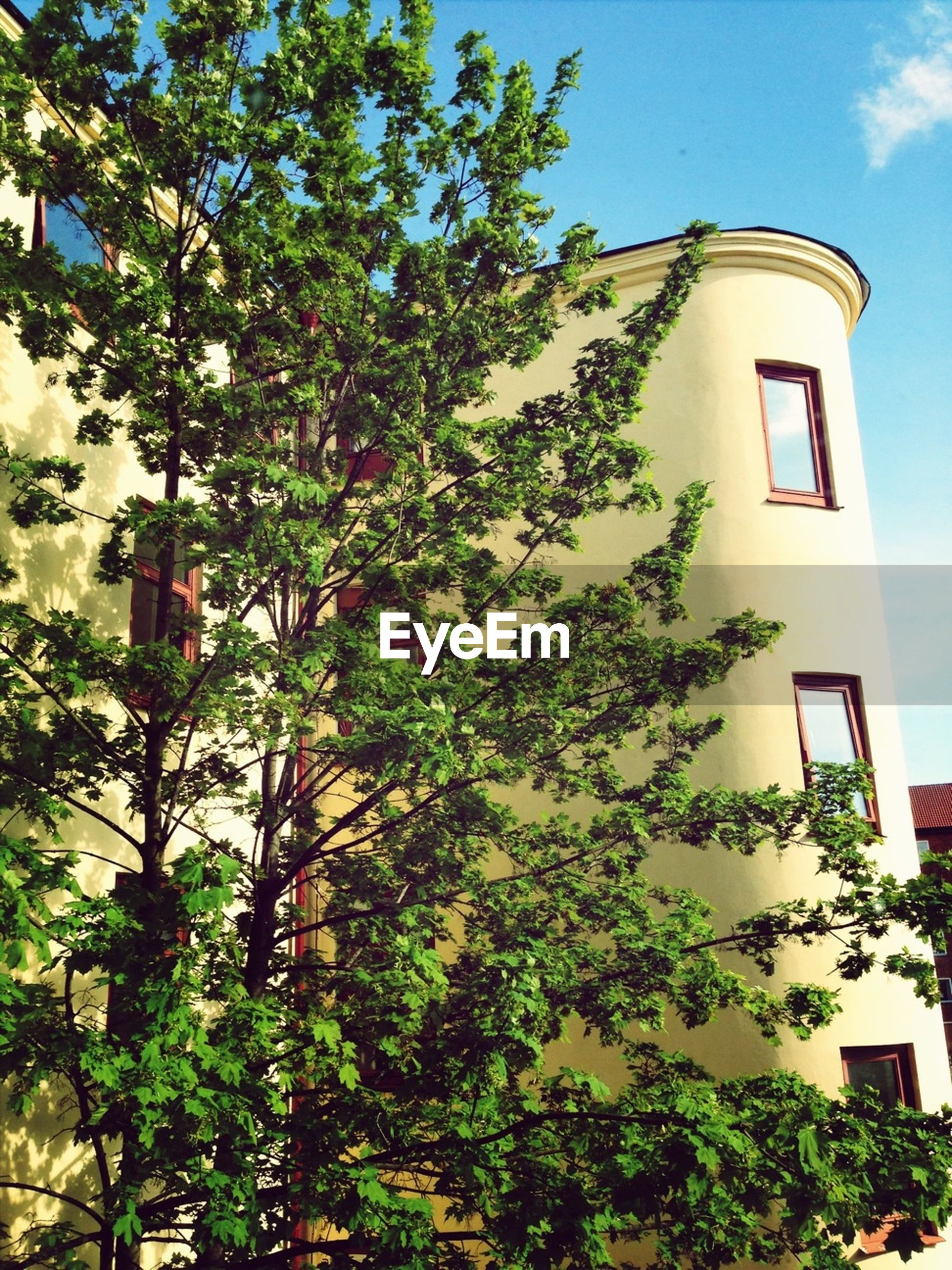 building exterior, architecture, built structure, tree, low angle view, window, growth, house, plant, green color, sky, ivy, residential building, branch, residential structure, day, leaf, nature, outdoors, sunlight