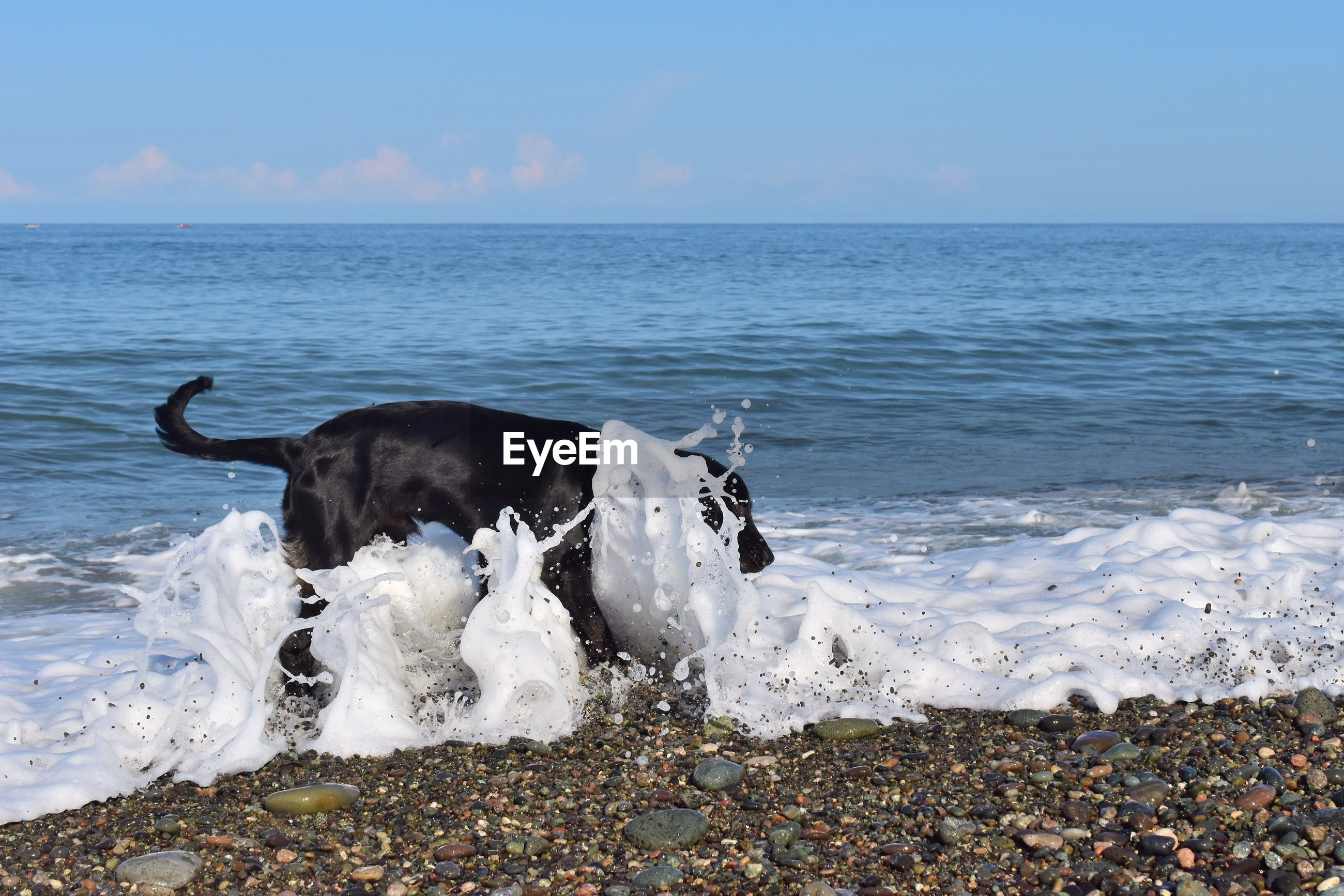 Waves splashing on dog at beach