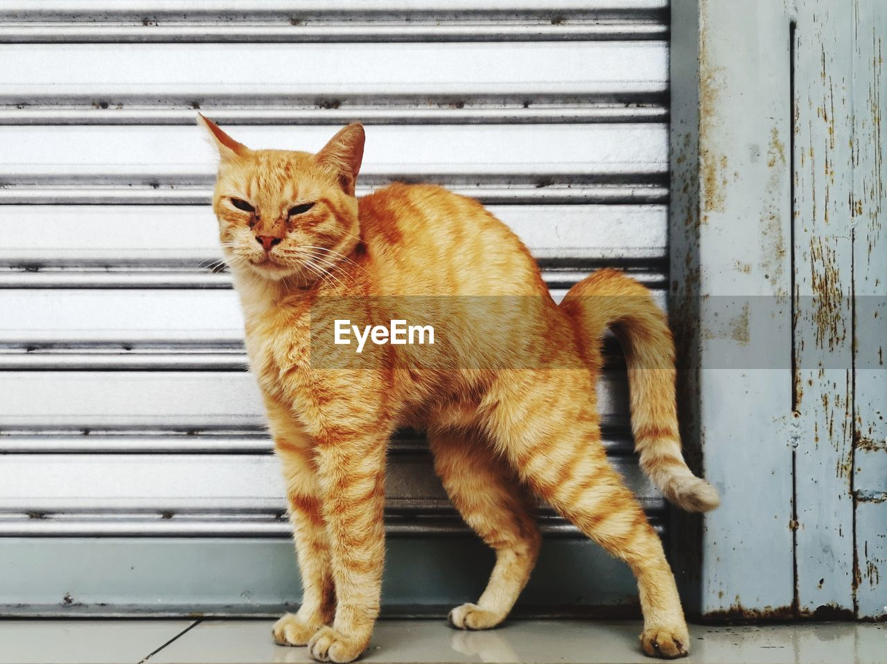 pets, domestic, domestic animals, mammal, cat, feline, domestic cat, one animal, vertebrate, no people, shutter, full length, metal, day, whisker, portrait, brown, ginger cat, iron