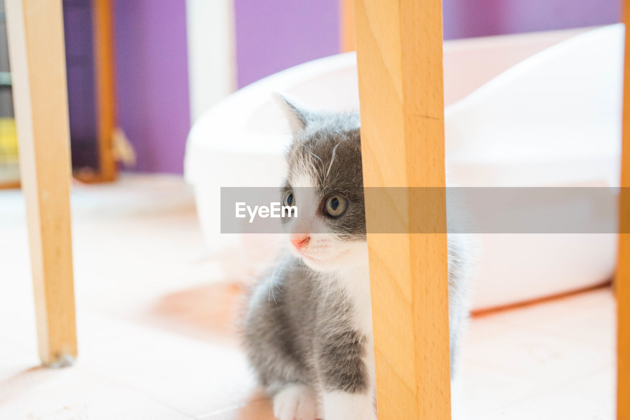 cat, domestic cat, domestic, mammal, domestic animals, pets, one animal, feline, vertebrate, no people, indoors, portrait, kitten, relaxation, selective focus, focus on foreground, looking at camera, whisker, animal eye