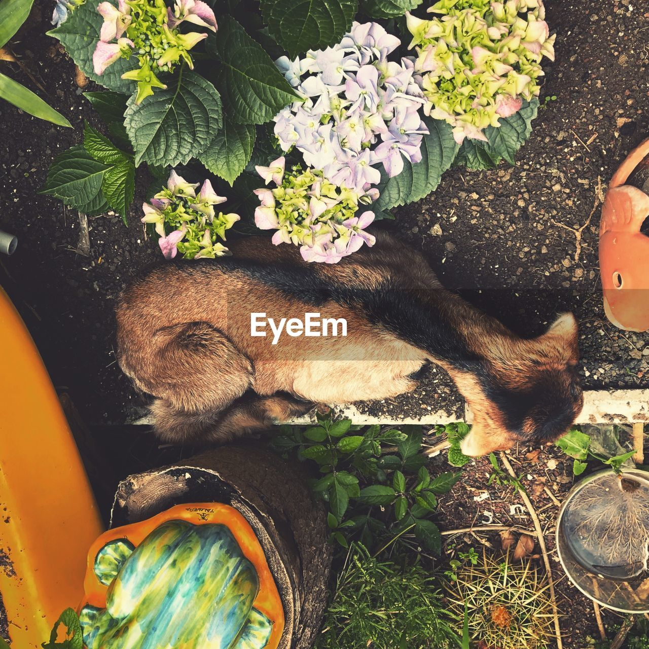 mammal, animal themes, animal, domestic animals, one animal, pets, vertebrate, domestic, plant, feline, cat, nature, flowering plant, flower, domestic cat, high angle view, day, growth, potted plant, no people, flower pot, whisker