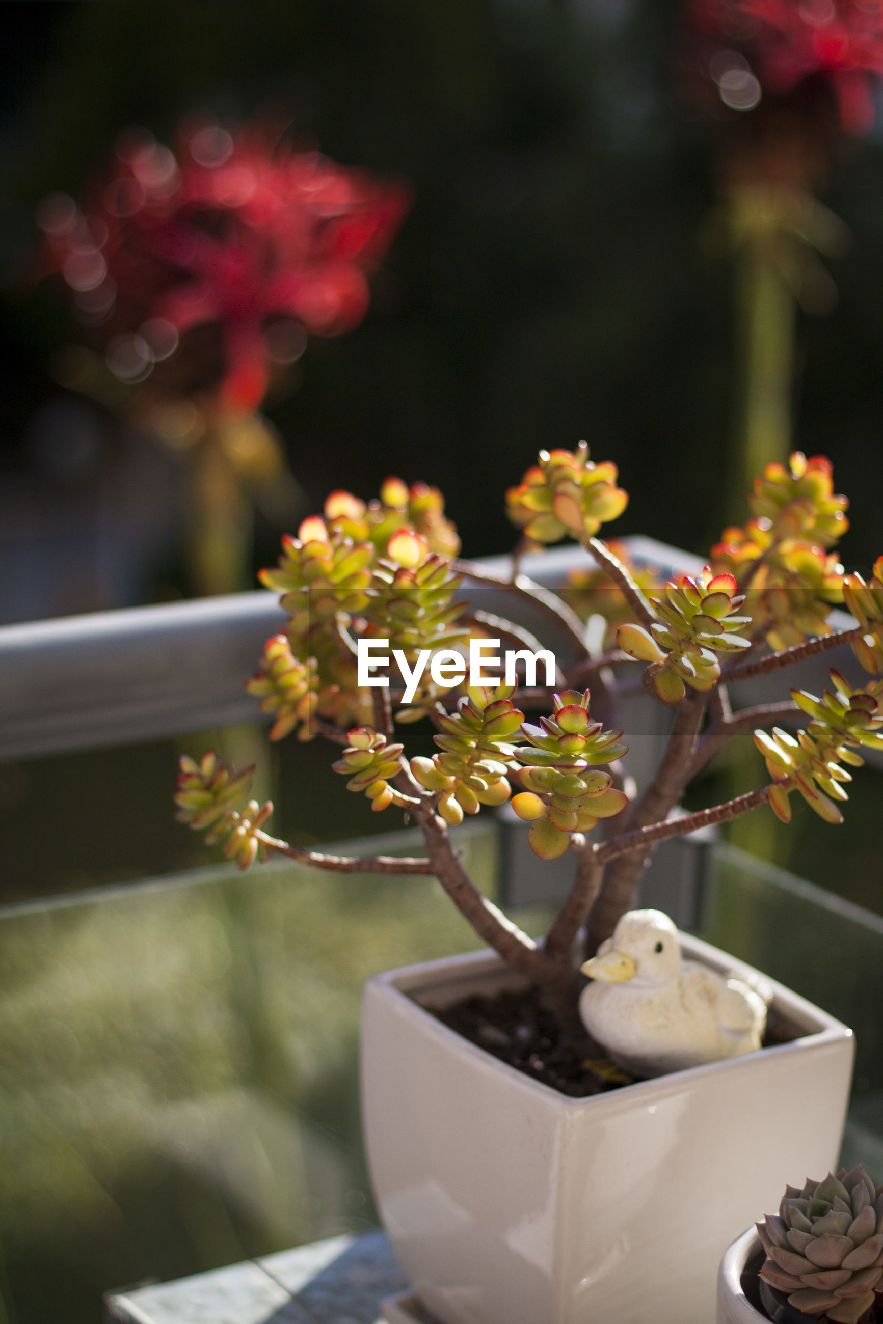 High angle view of potted plant on table during sunny day