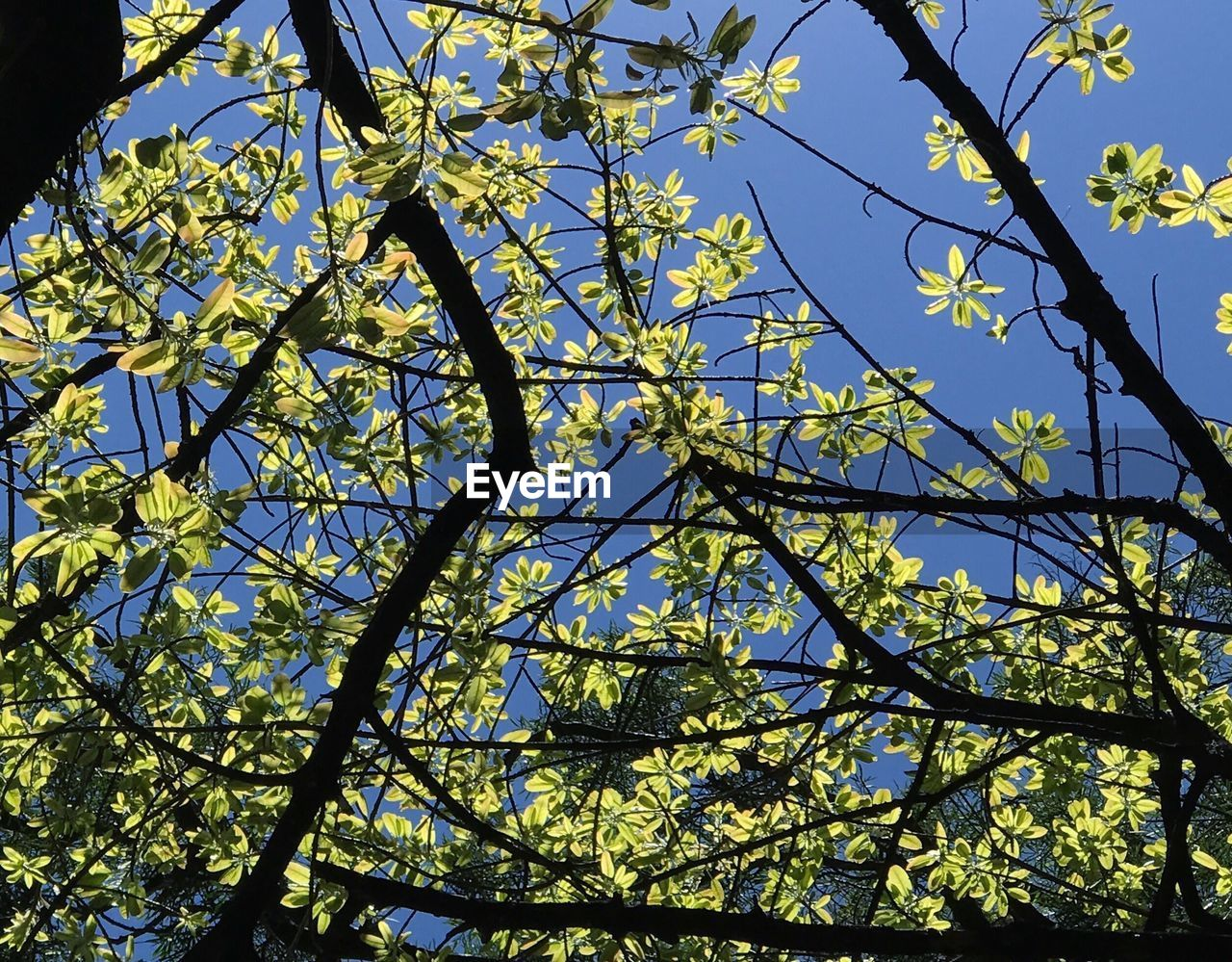 branch, tree, growth, nature, low angle view, flower, day, leaf, beauty in nature, no people, outdoors, fragility, freshness
