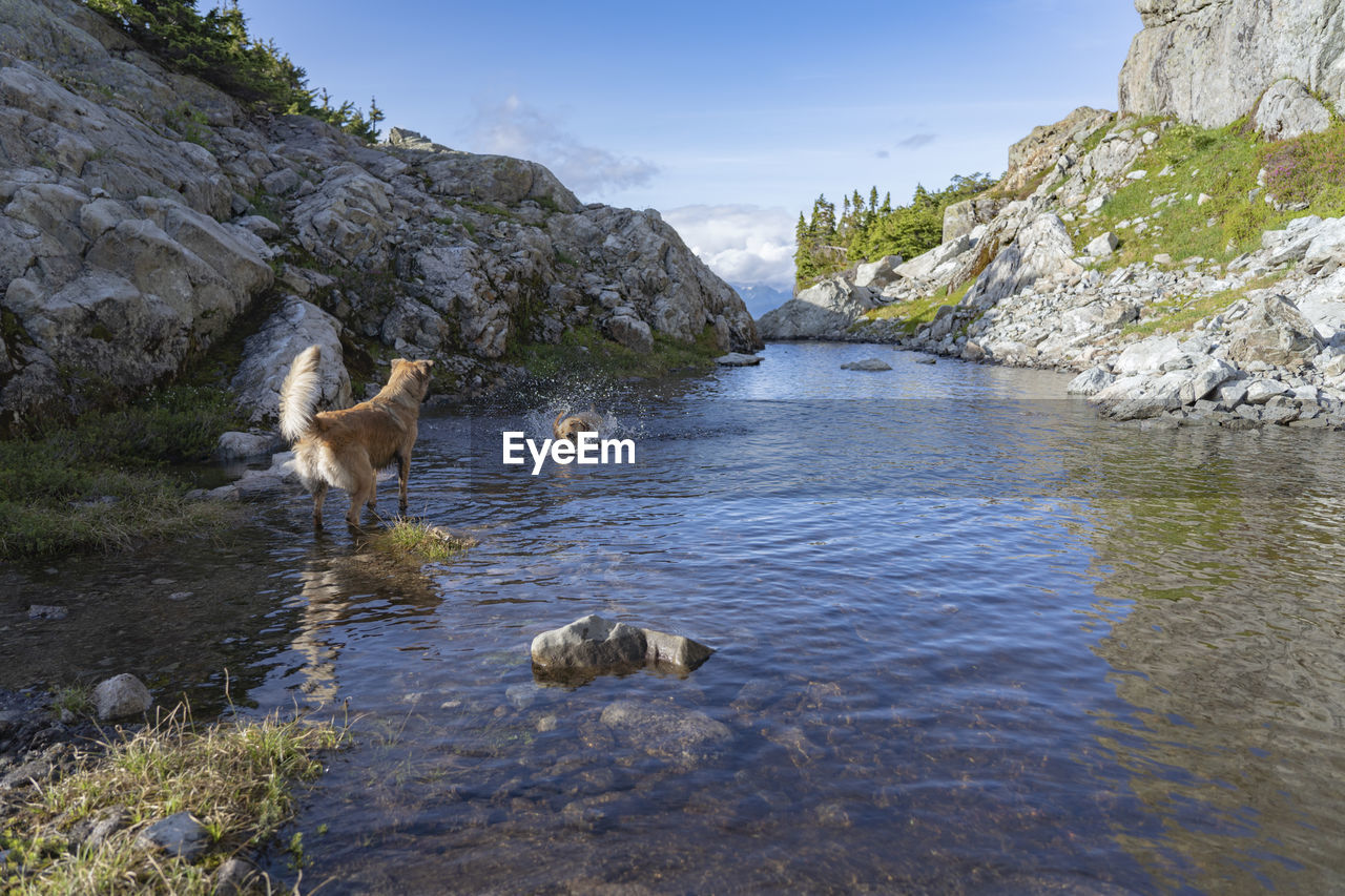 water, animal themes, animal, mammal, rock, solid, vertebrate, nature, animal wildlife, rock - object, mountain, animals in the wild, beauty in nature, day, no people, group of animals, lake, non-urban scene, outdoors, herbivorous