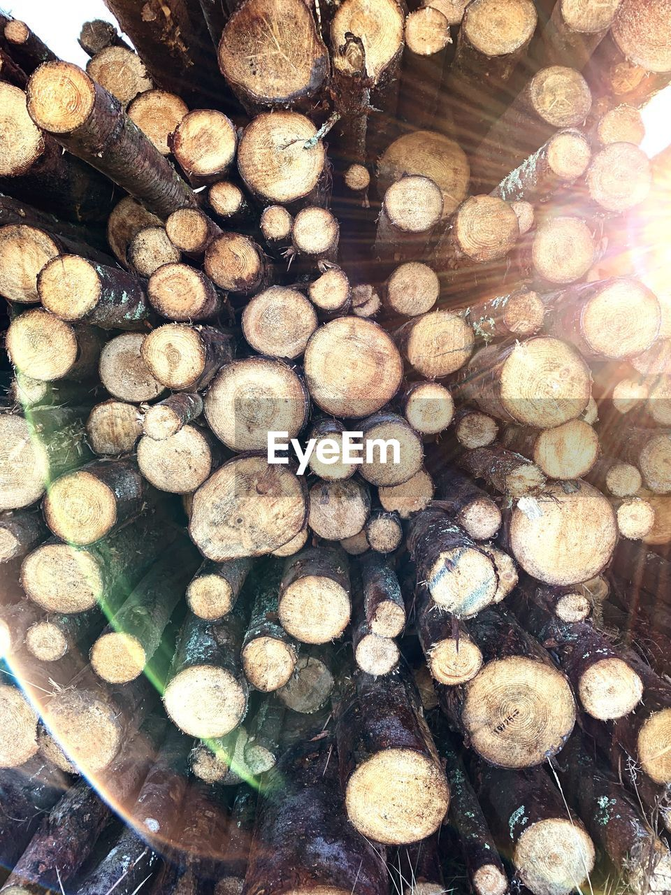 abundance, timber, large group of objects, wood, log, full frame, lumber industry, firewood, tree, deforestation, no people, backgrounds, stack, wood - material, forest, fuel and power generation, fossil fuel, nature, environmental issues, choice