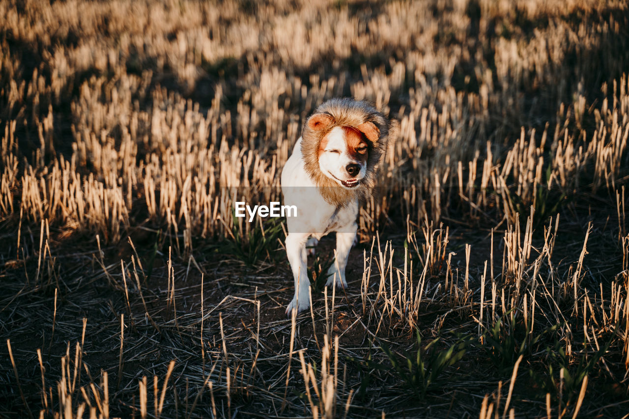 PORTRAIT OF DOG RUNNING ON PLANTS
