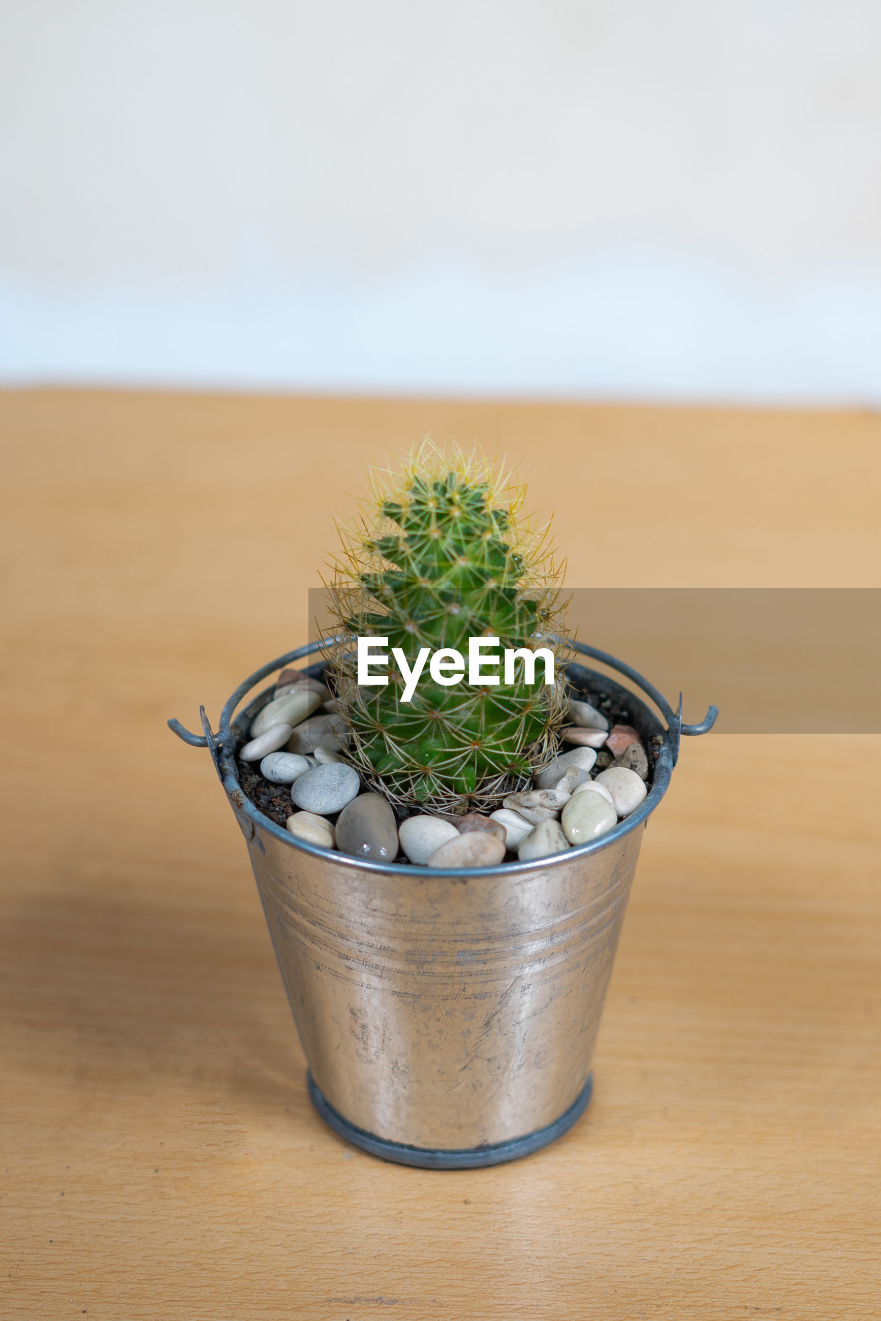 CLOSE-UP OF POTTED CACTUS PLANT ON TABLE