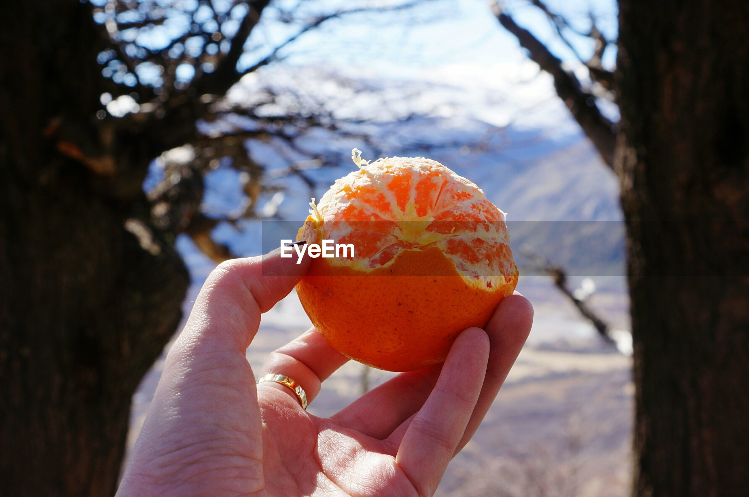Cropped hand of woman holding orange fruit outdoors