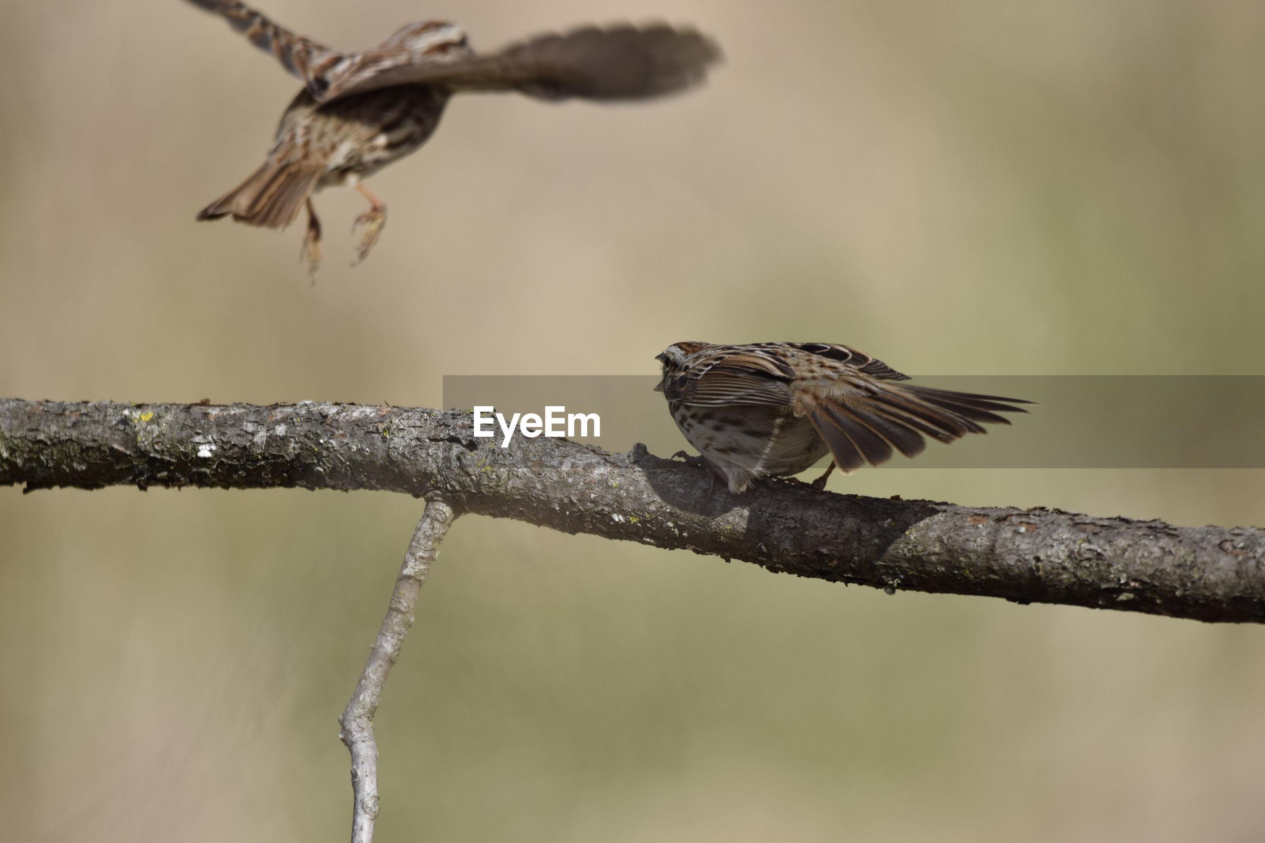 BIRD FLYING OVER BRANCH